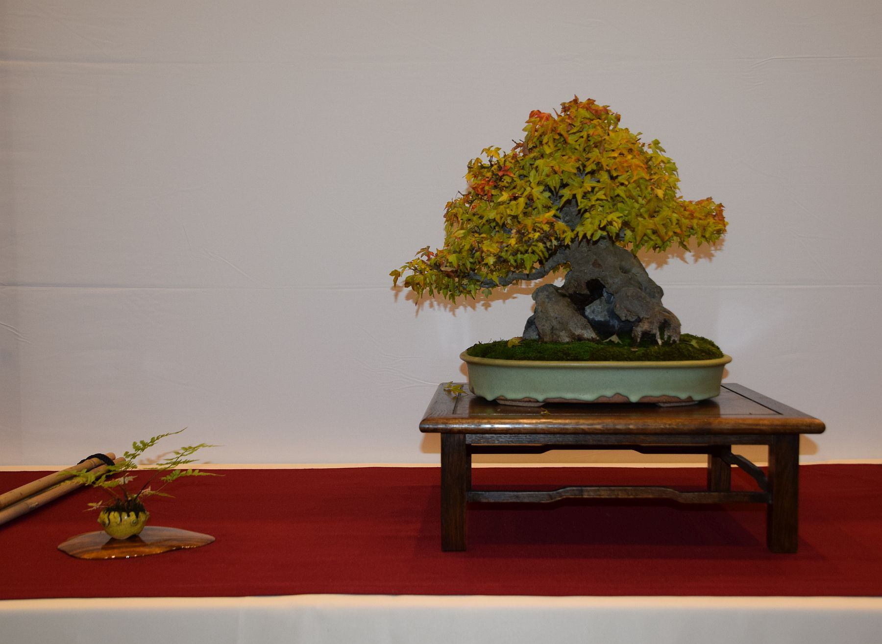 euk-bonsai-ten-2016-club-bonsai-074