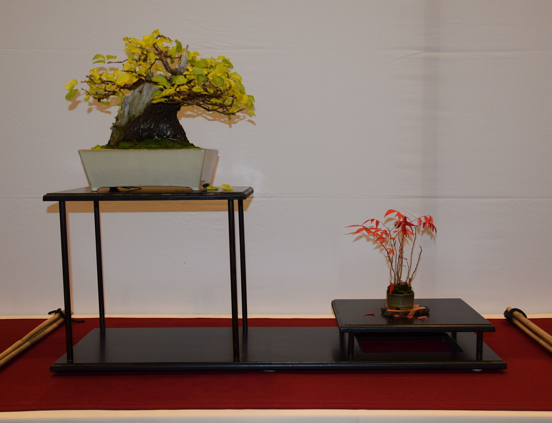 euk-bonsai-ten-2016-club-bonsai-075