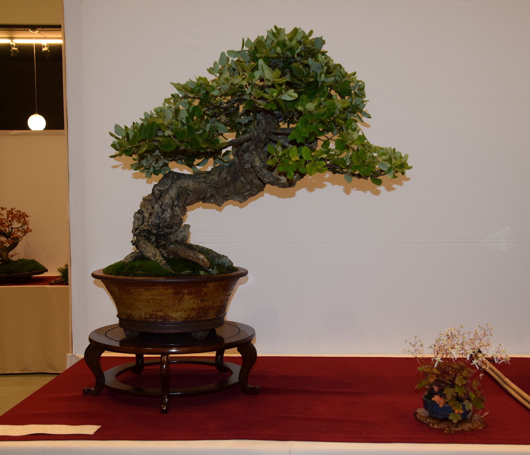 euk-bonsai-ten-2016-club-bonsai-076
