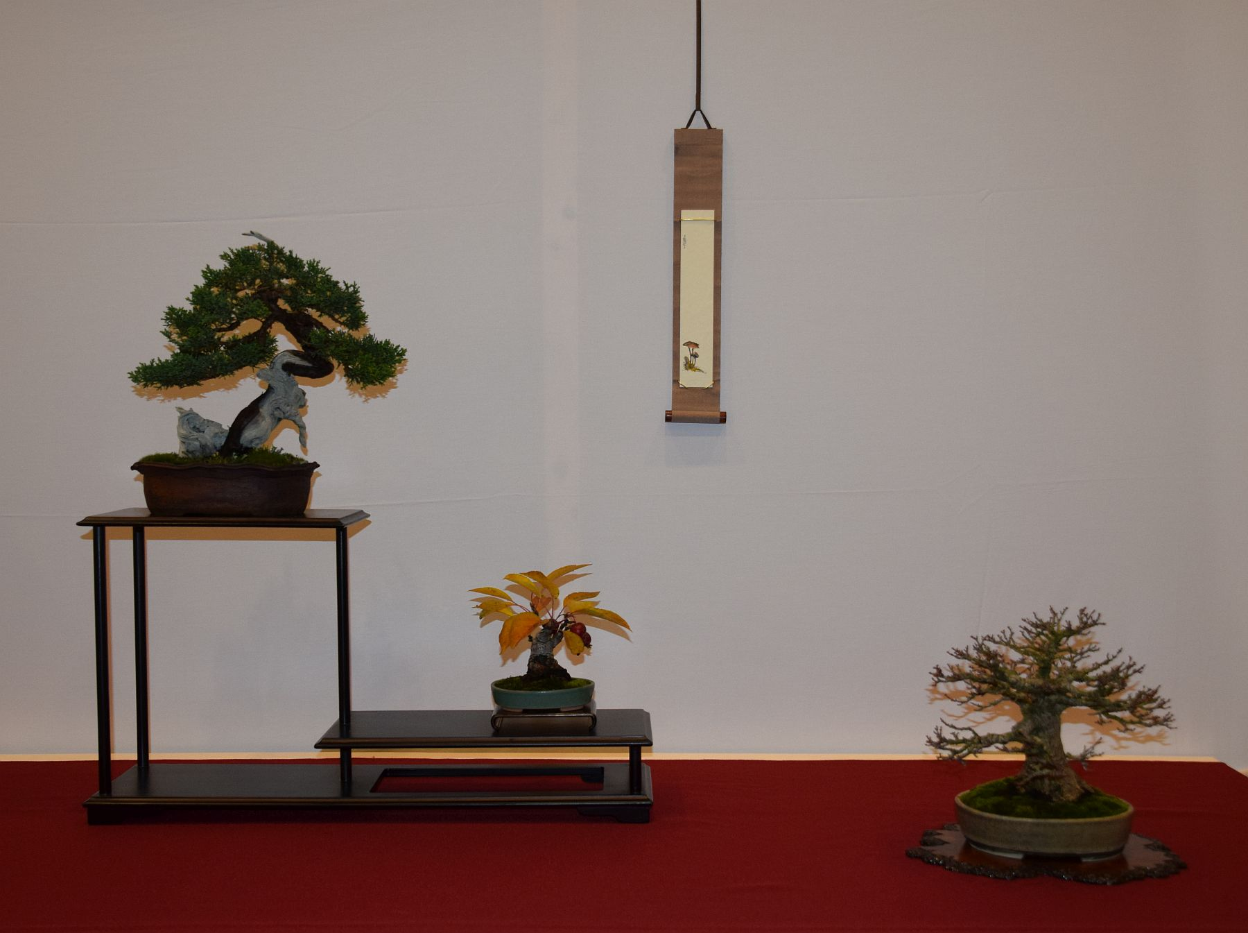 euk-bonsai-ten-2016-club-bonsai-077