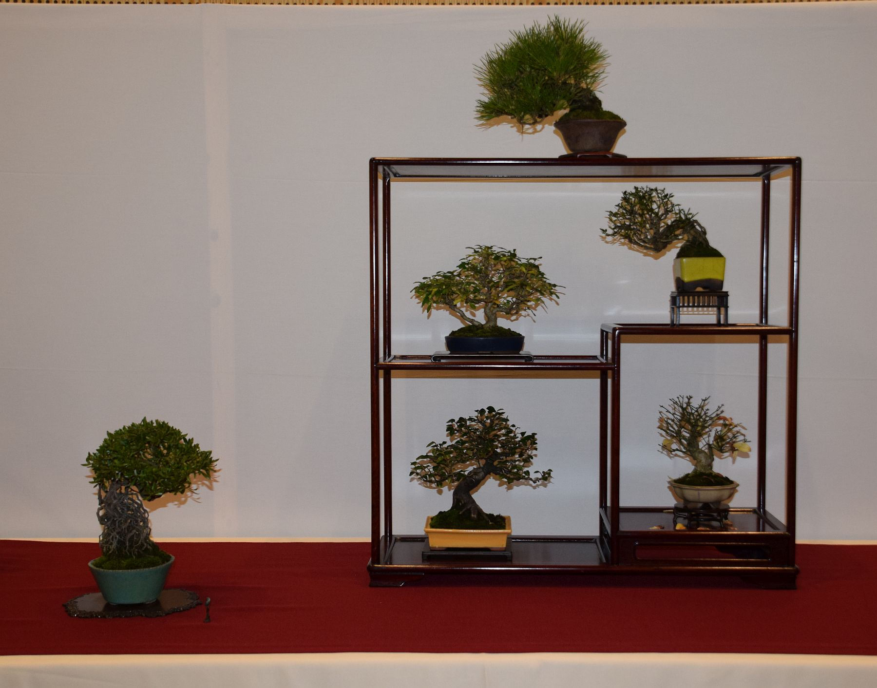euk-bonsai-ten-2016-club-bonsai-078