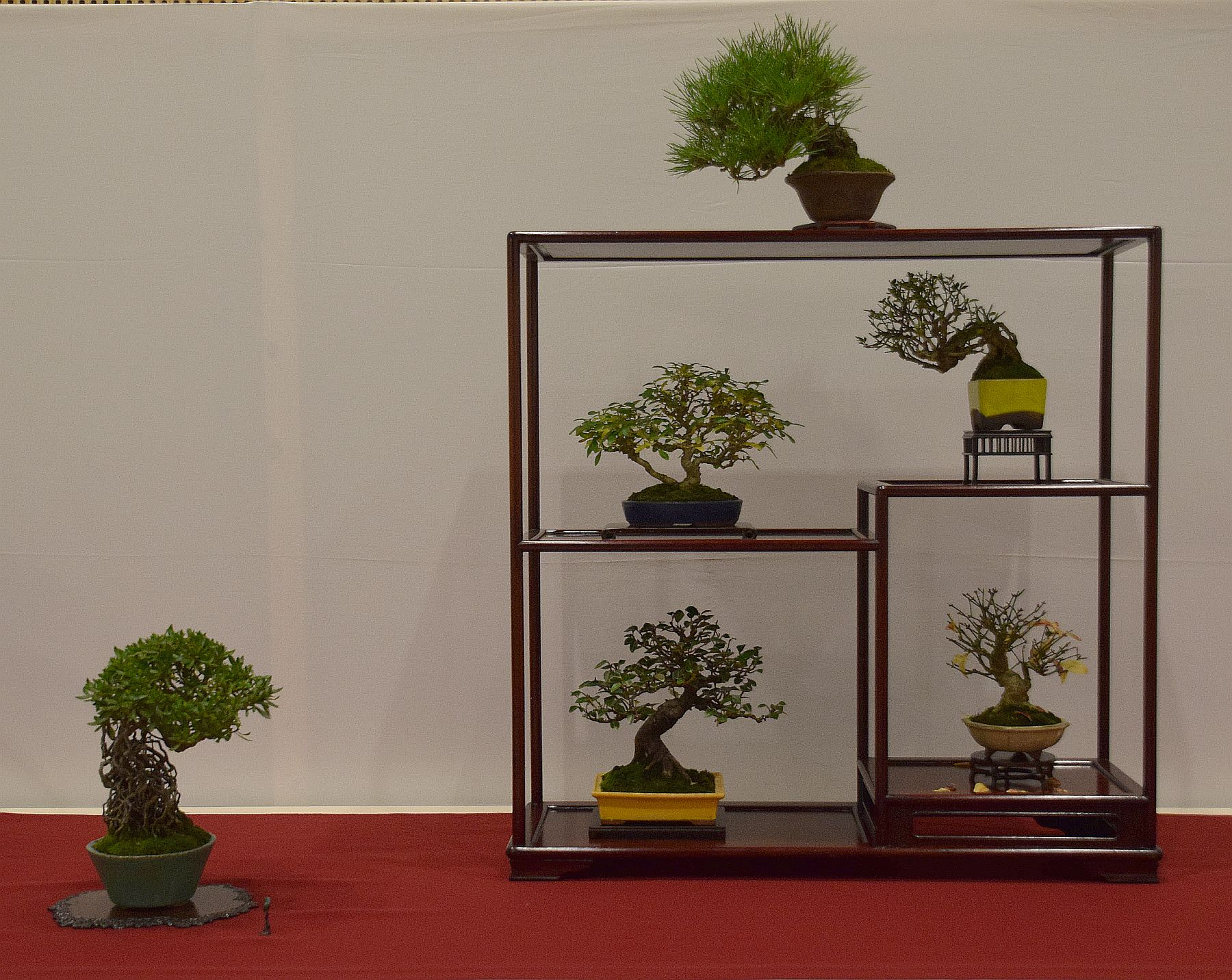 euk-bonsai-ten-2016-club-bonsai-079
