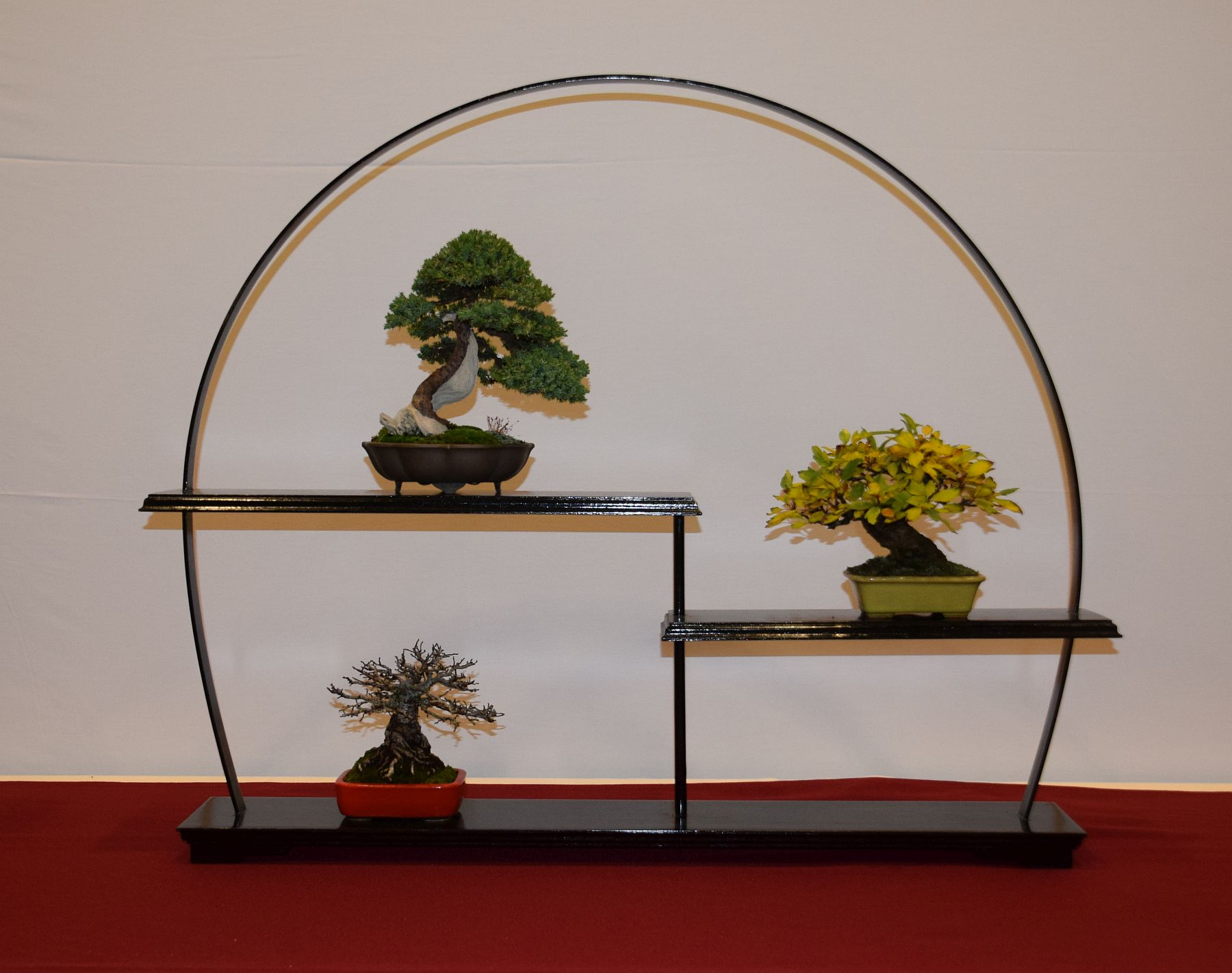 euk-bonsai-ten-2016-club-bonsai-080