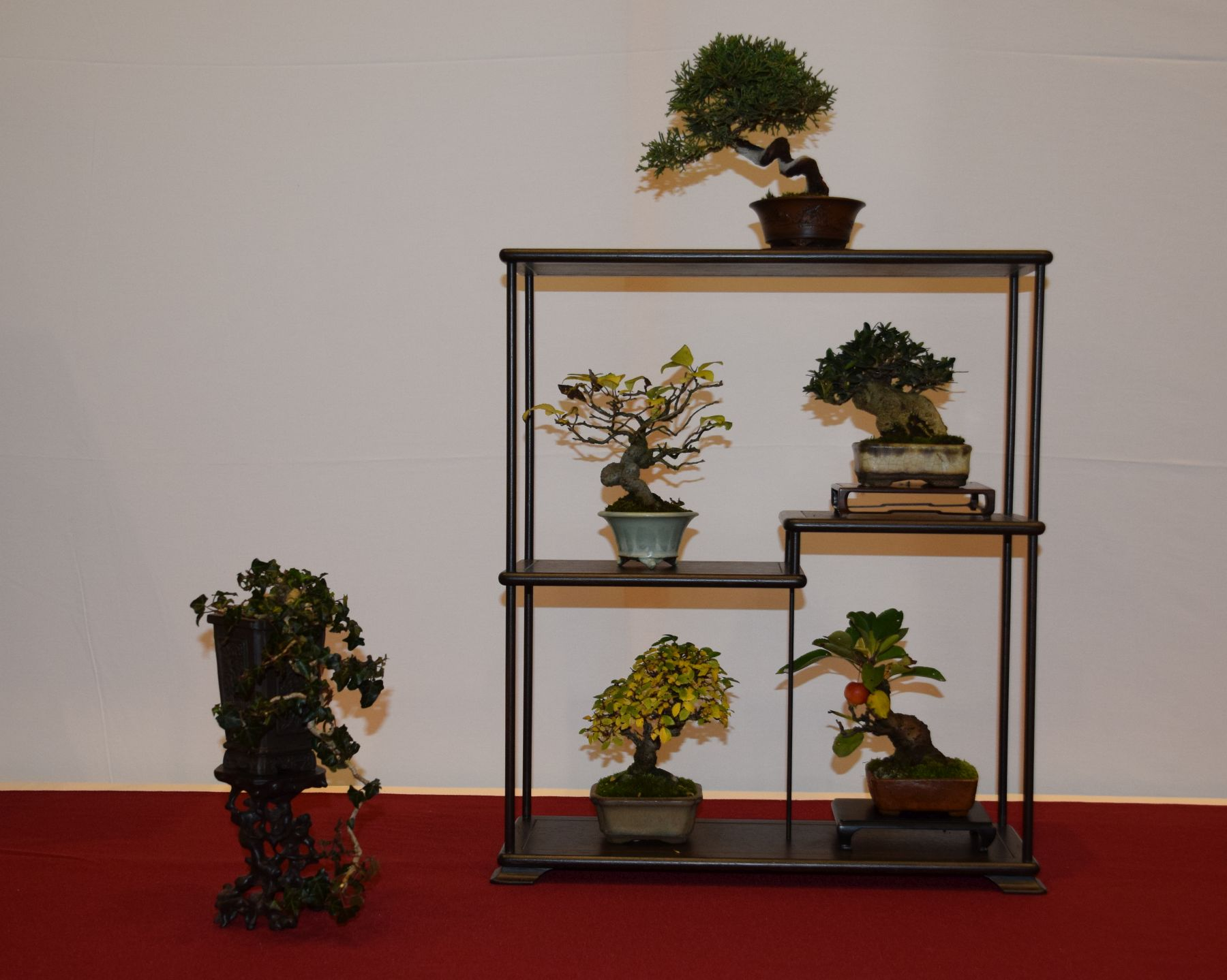 euk-bonsai-ten-2016-club-bonsai-081