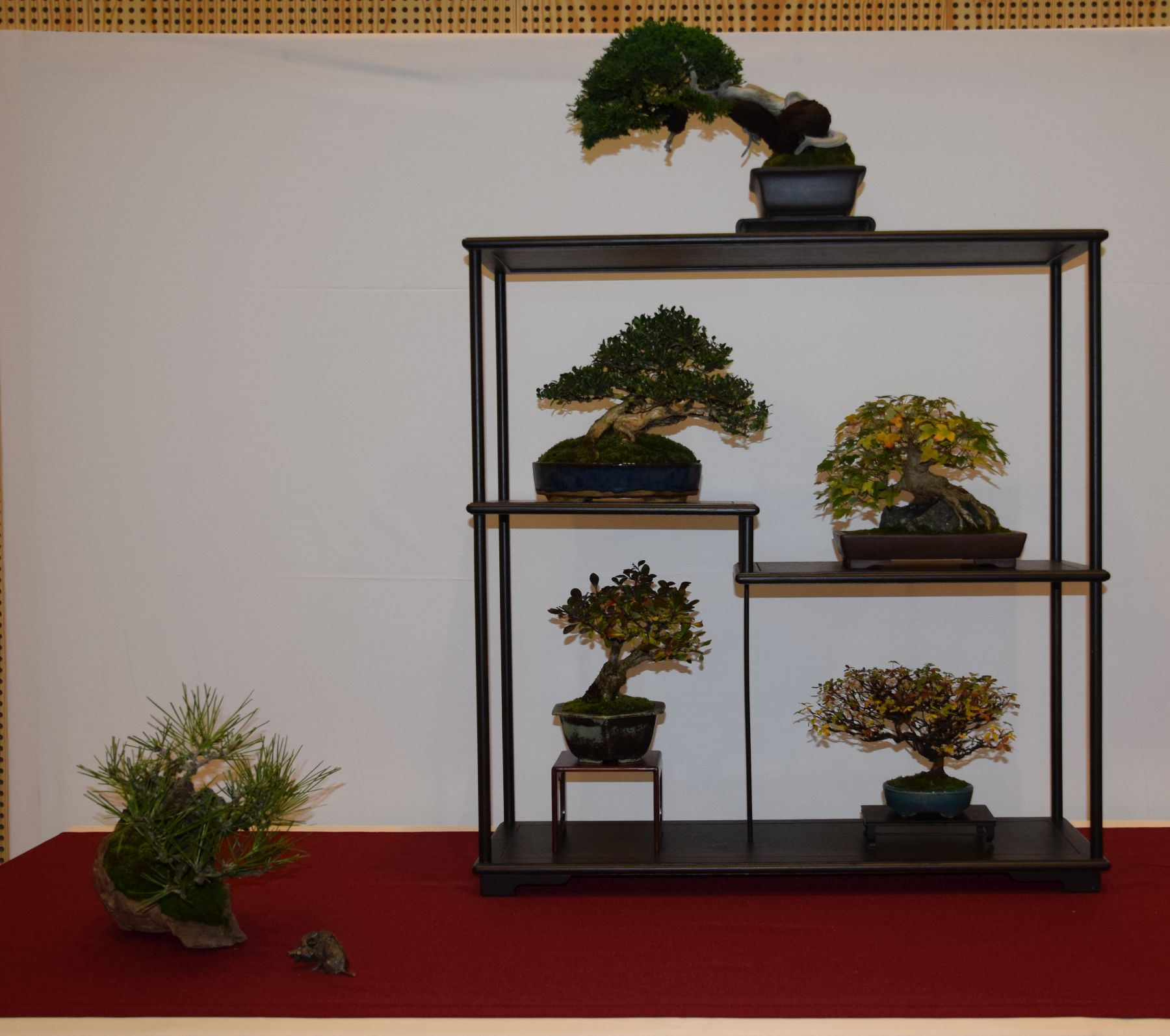 euk-bonsai-ten-2016-club-bonsai-082