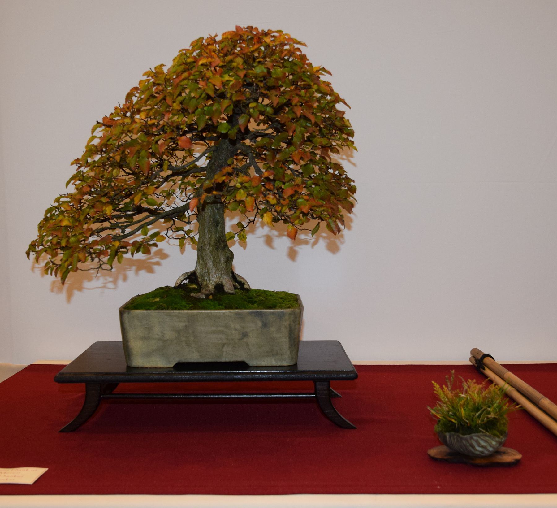 euk-bonsai-ten-2016-club-bonsai-088