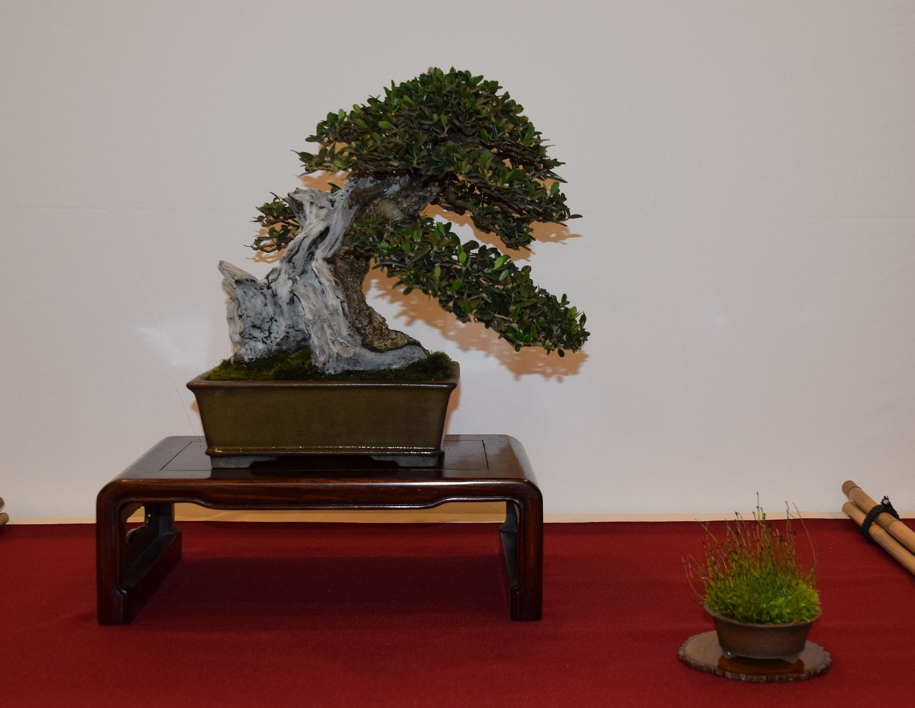 euk-bonsai-ten-2016-club-bonsai-089
