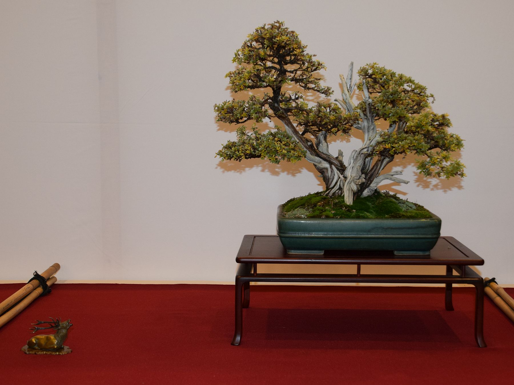 euk-bonsai-ten-2016-club-bonsai-090