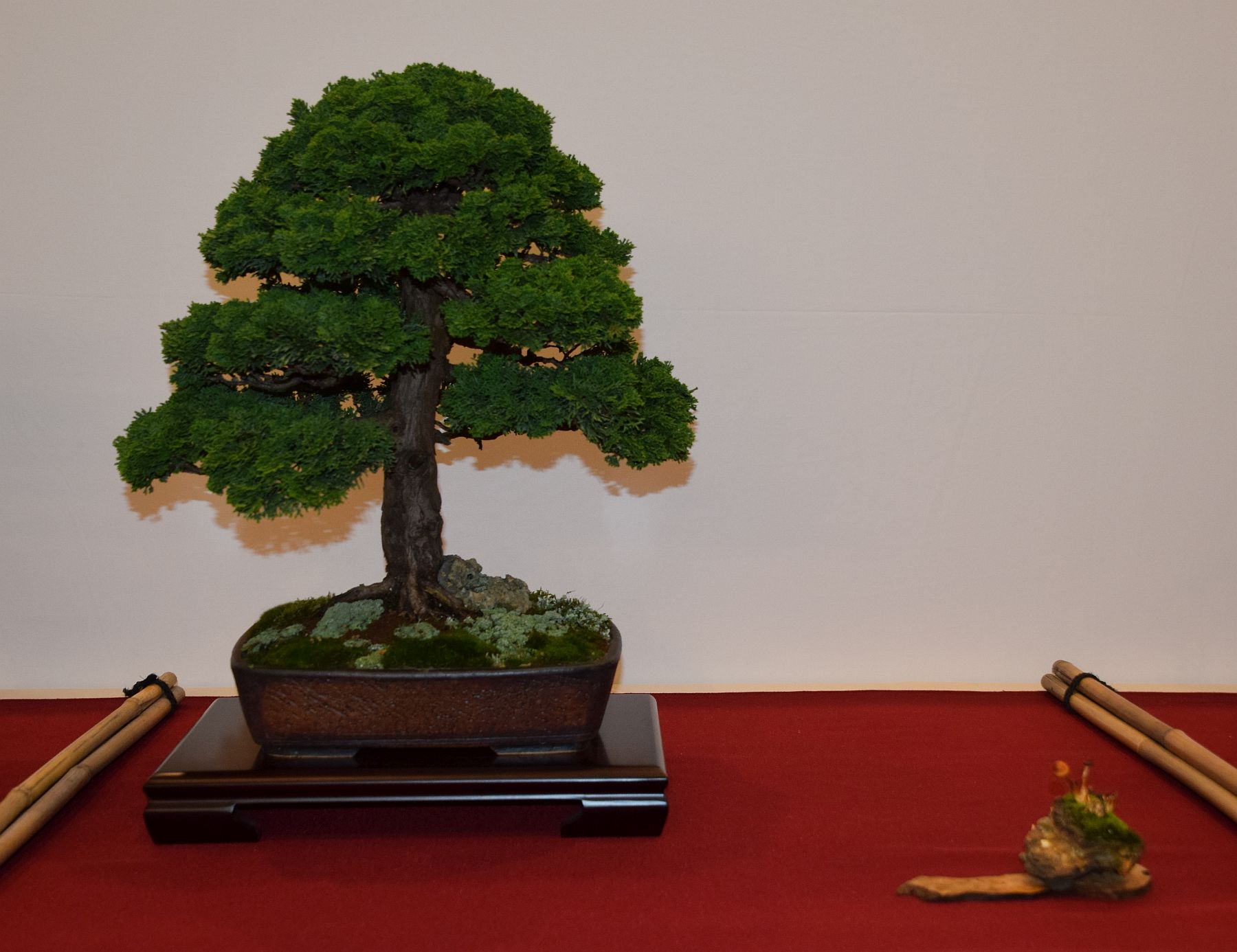 euk-bonsai-ten-2016-club-bonsai-091