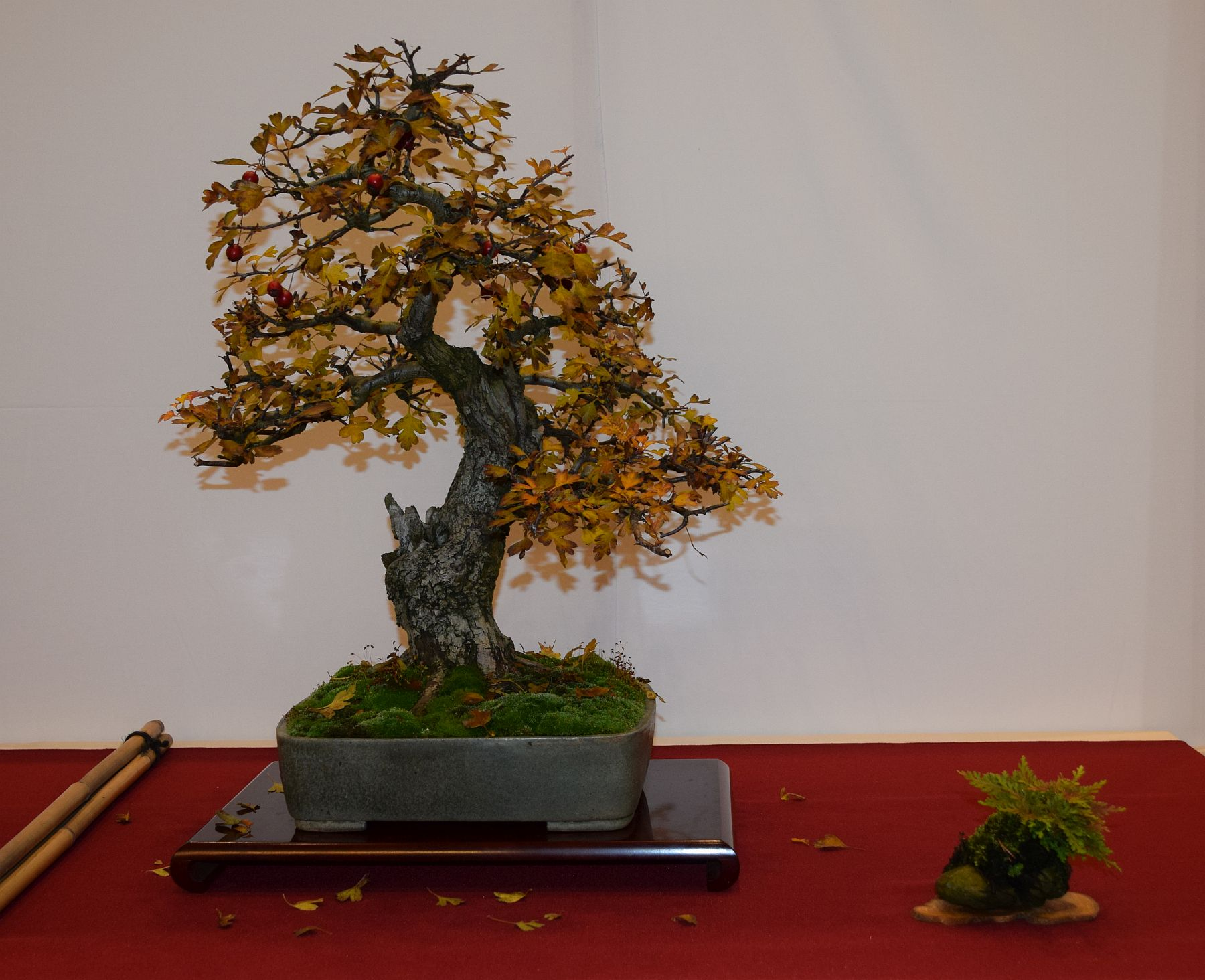 euk-bonsai-ten-2016-club-bonsai-092