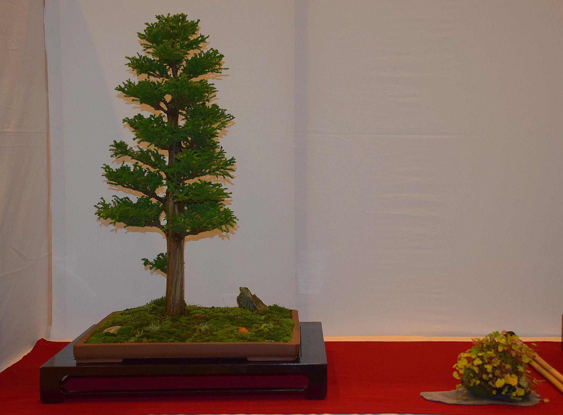 euk-bonsai-ten-2016-club-bonsai-093