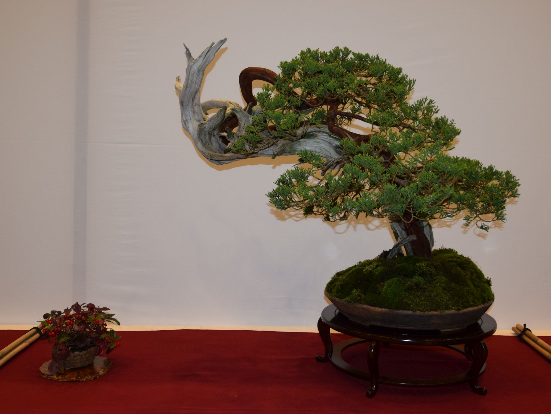 euk-bonsai-ten-2016-club-bonsai-095