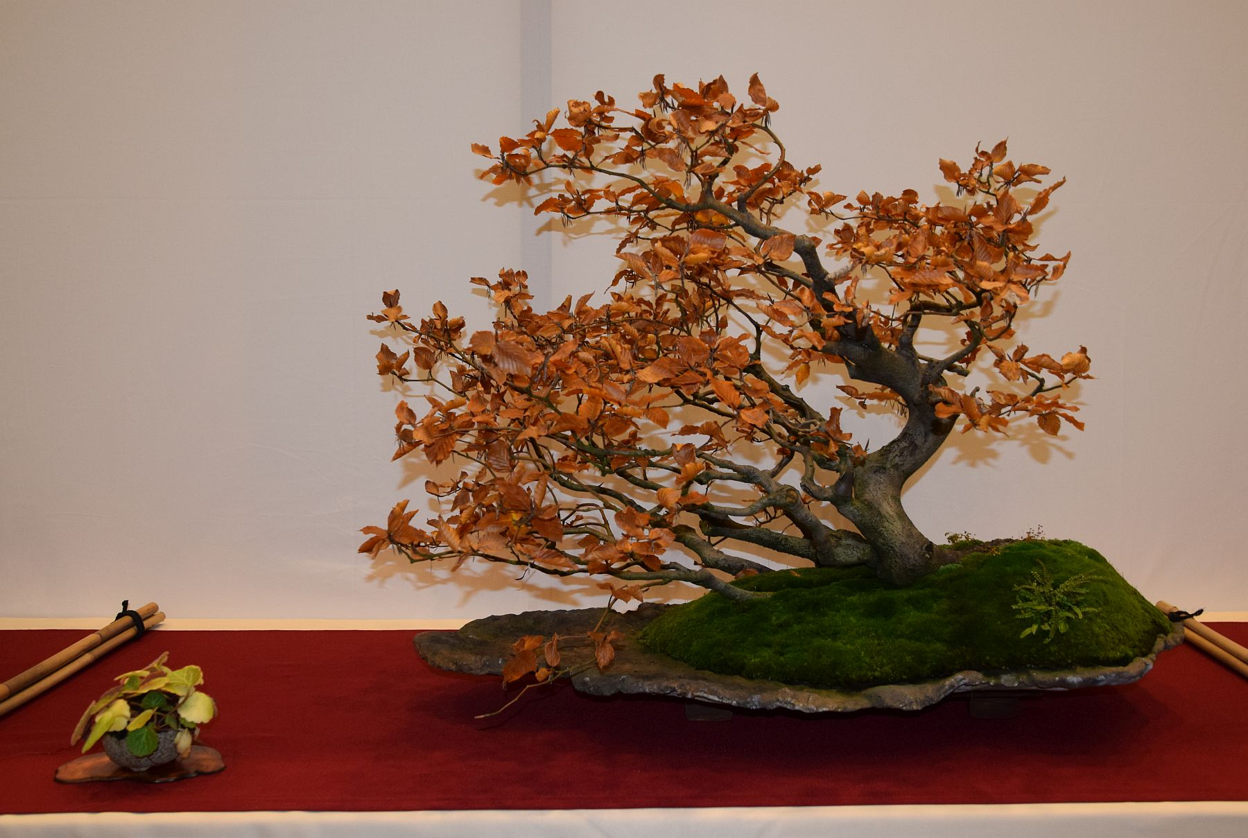 euk-bonsai-ten-2016-club-bonsai-096