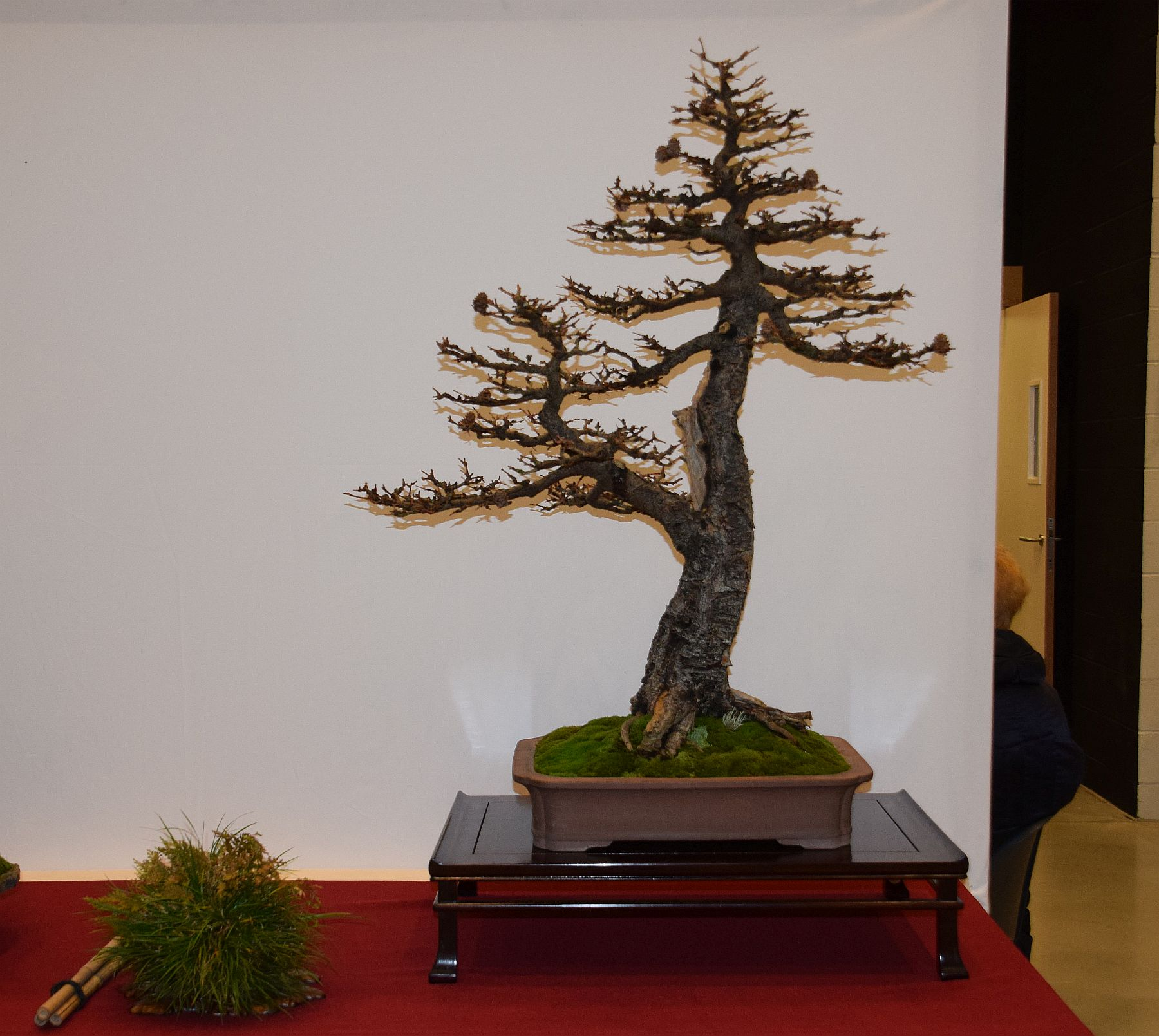euk-bonsai-ten-2016-club-bonsai-097