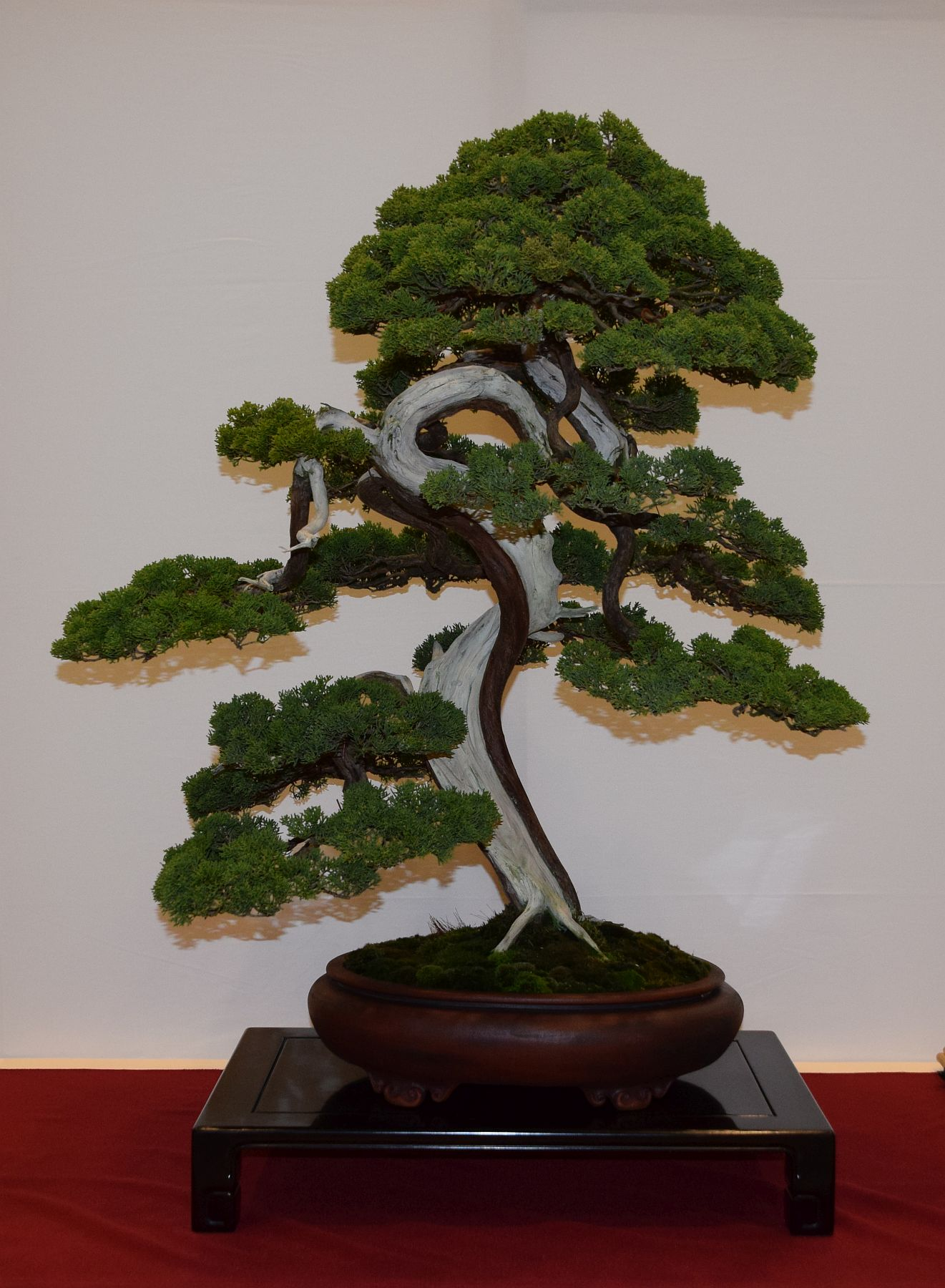 euk-bonsai-ten-2016-club-bonsai-098