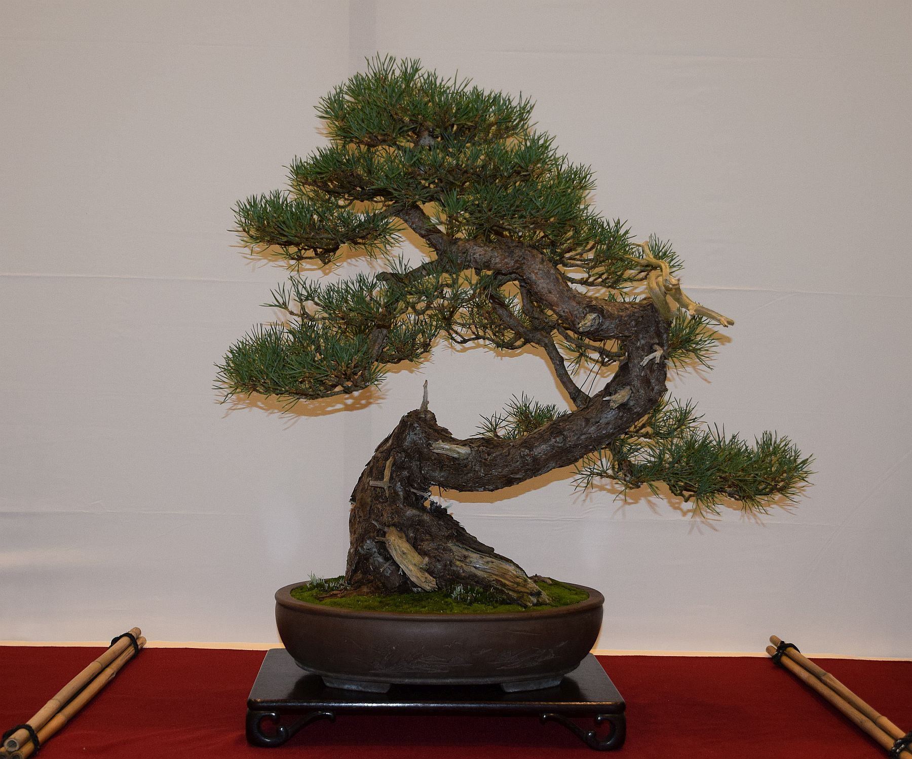 euk-bonsai-ten-2016-club-bonsai-100