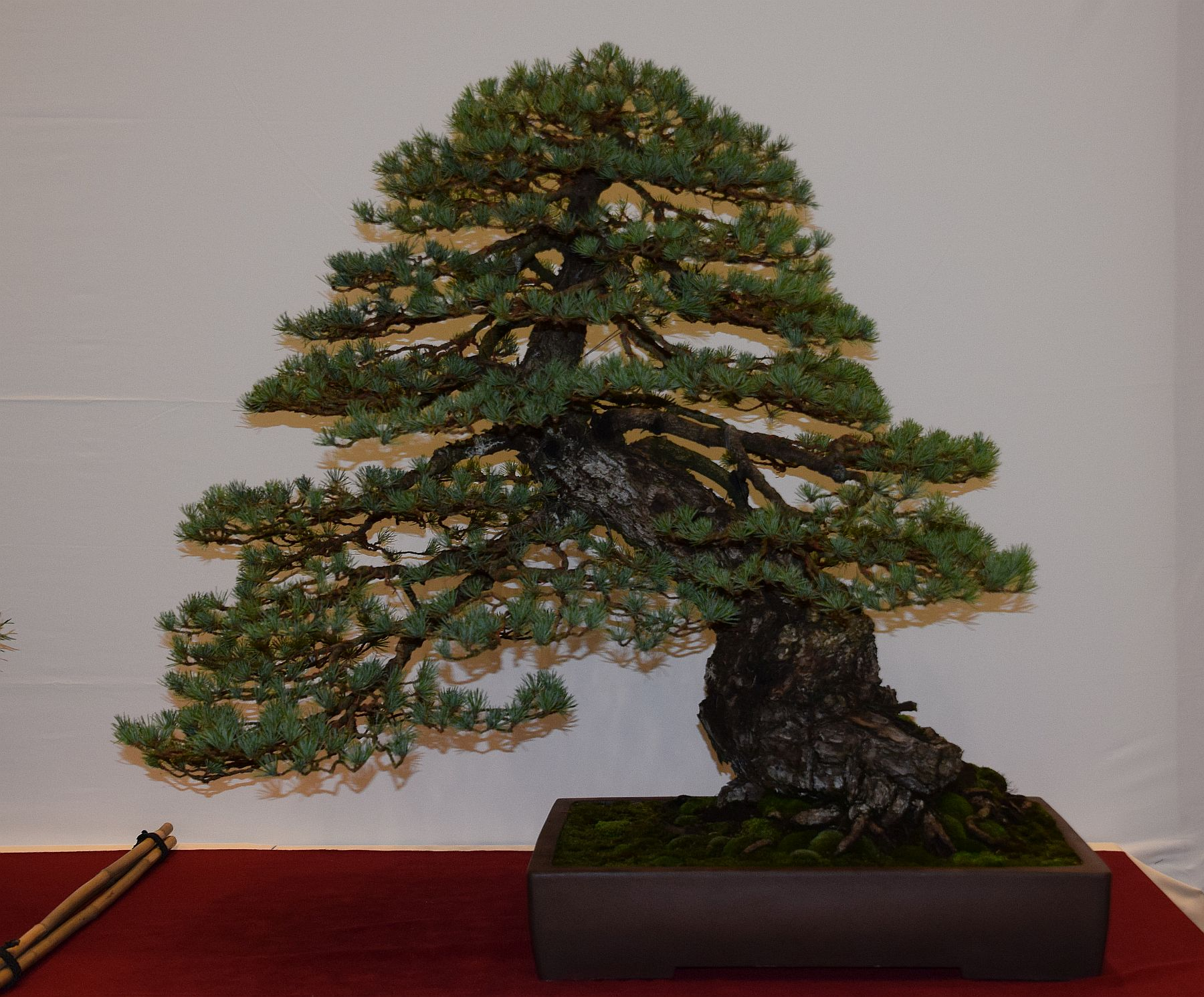 euk-bonsai-ten-2016-club-bonsai-101