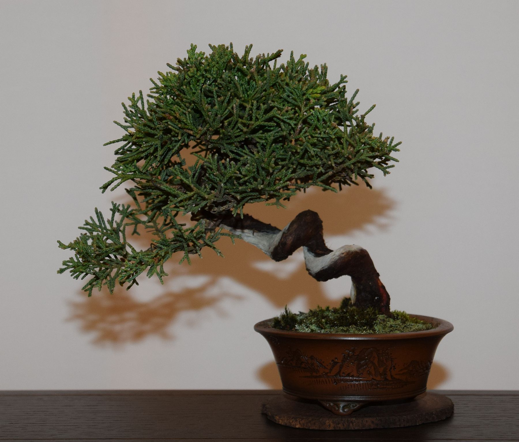 euk-bonsai-ten-2016-club-bonsai-108