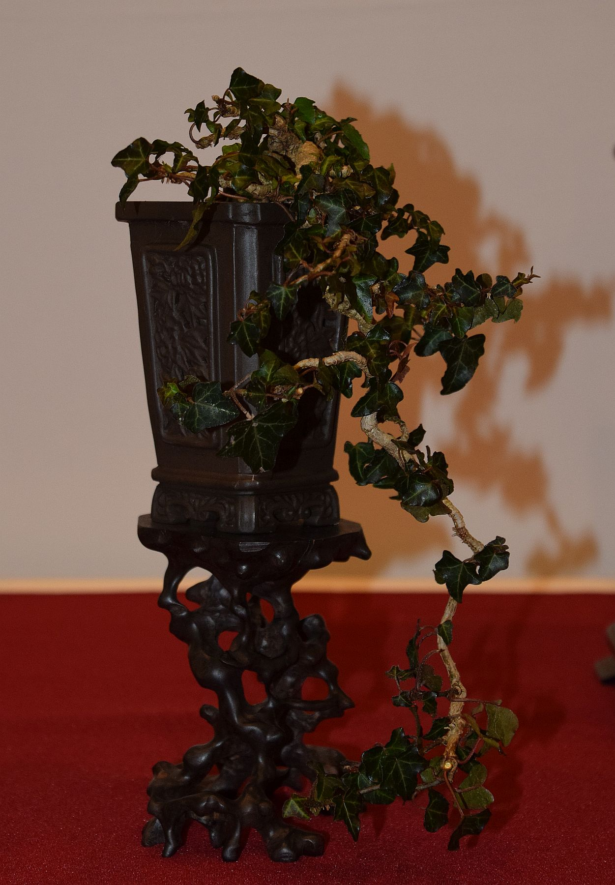 euk-bonsai-ten-2016-club-bonsai-113