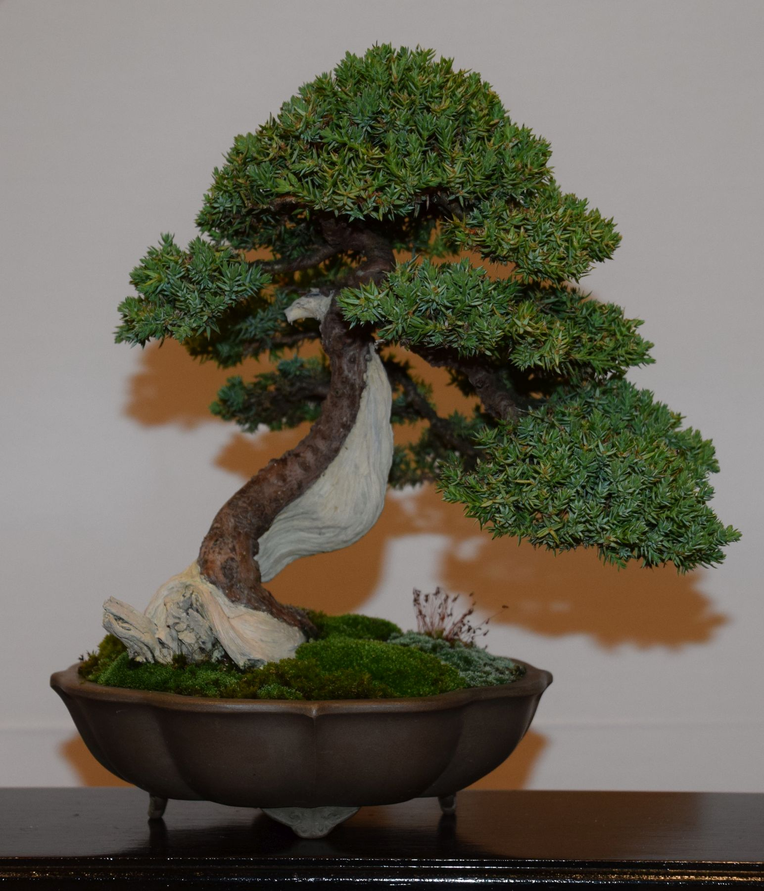 euk-bonsai-ten-2016-club-bonsai-114