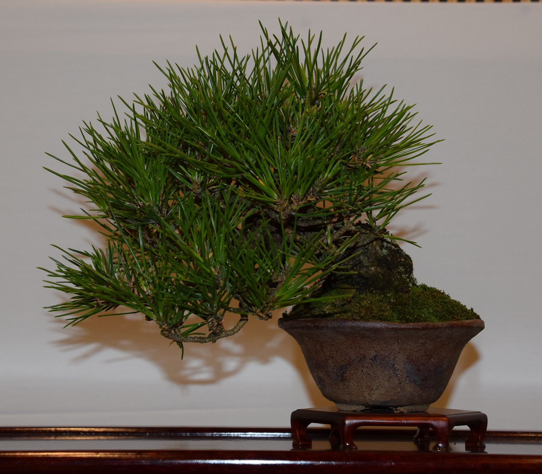 euk-bonsai-ten-2016-club-bonsai-117