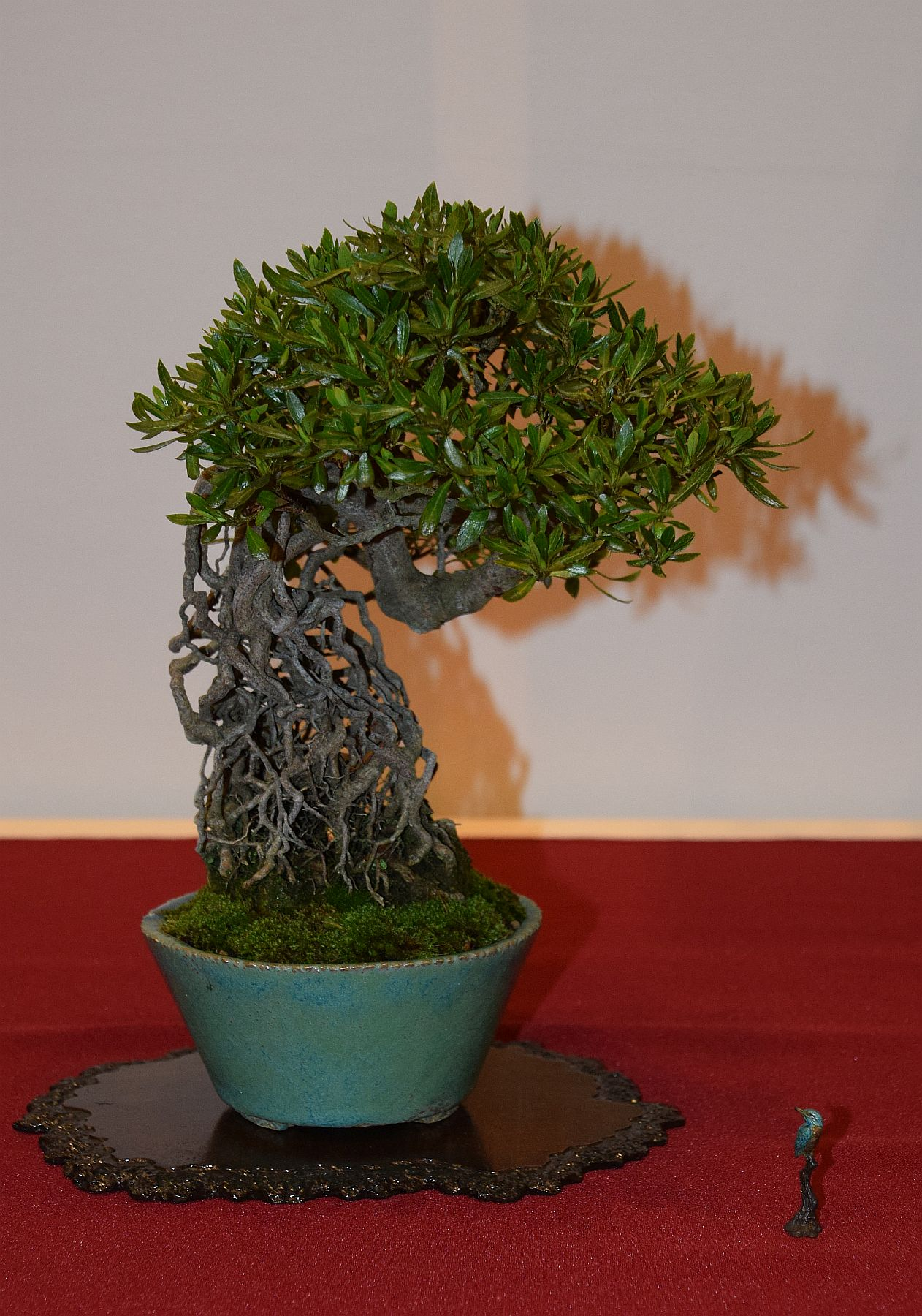 euk-bonsai-ten-2016-club-bonsai-122
