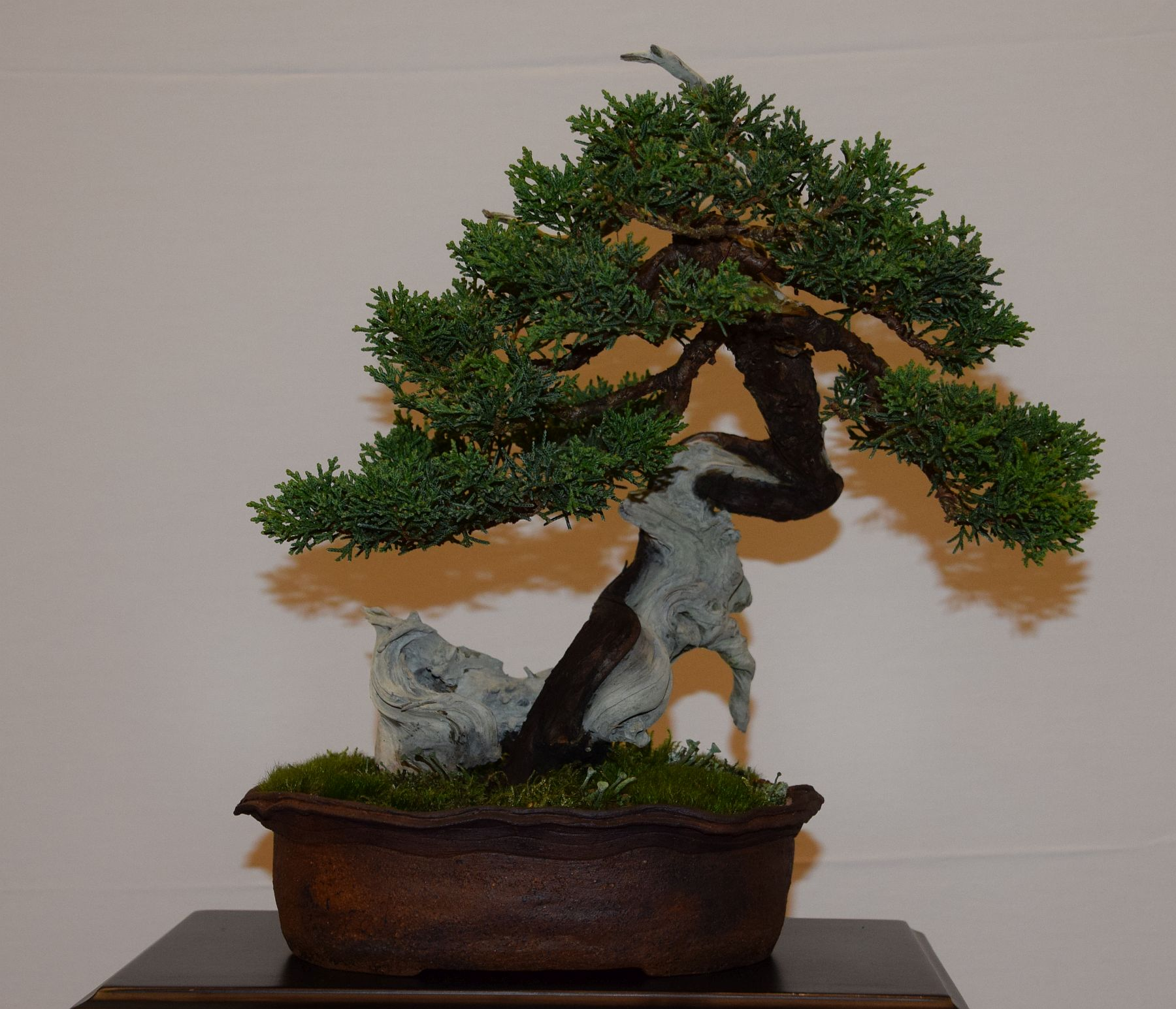 euk-bonsai-ten-2016-club-bonsai-123