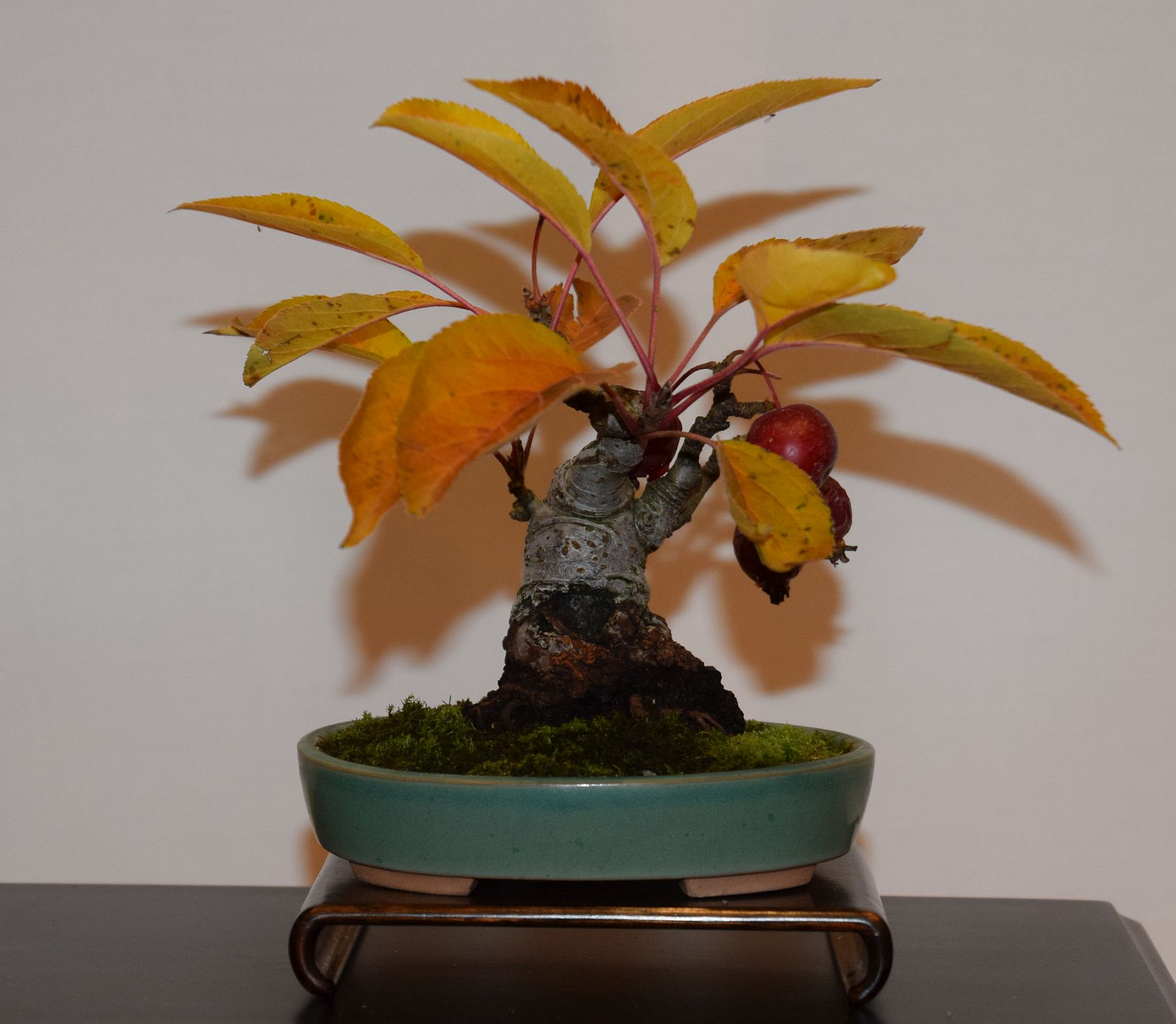 euk-bonsai-ten-2016-club-bonsai-124