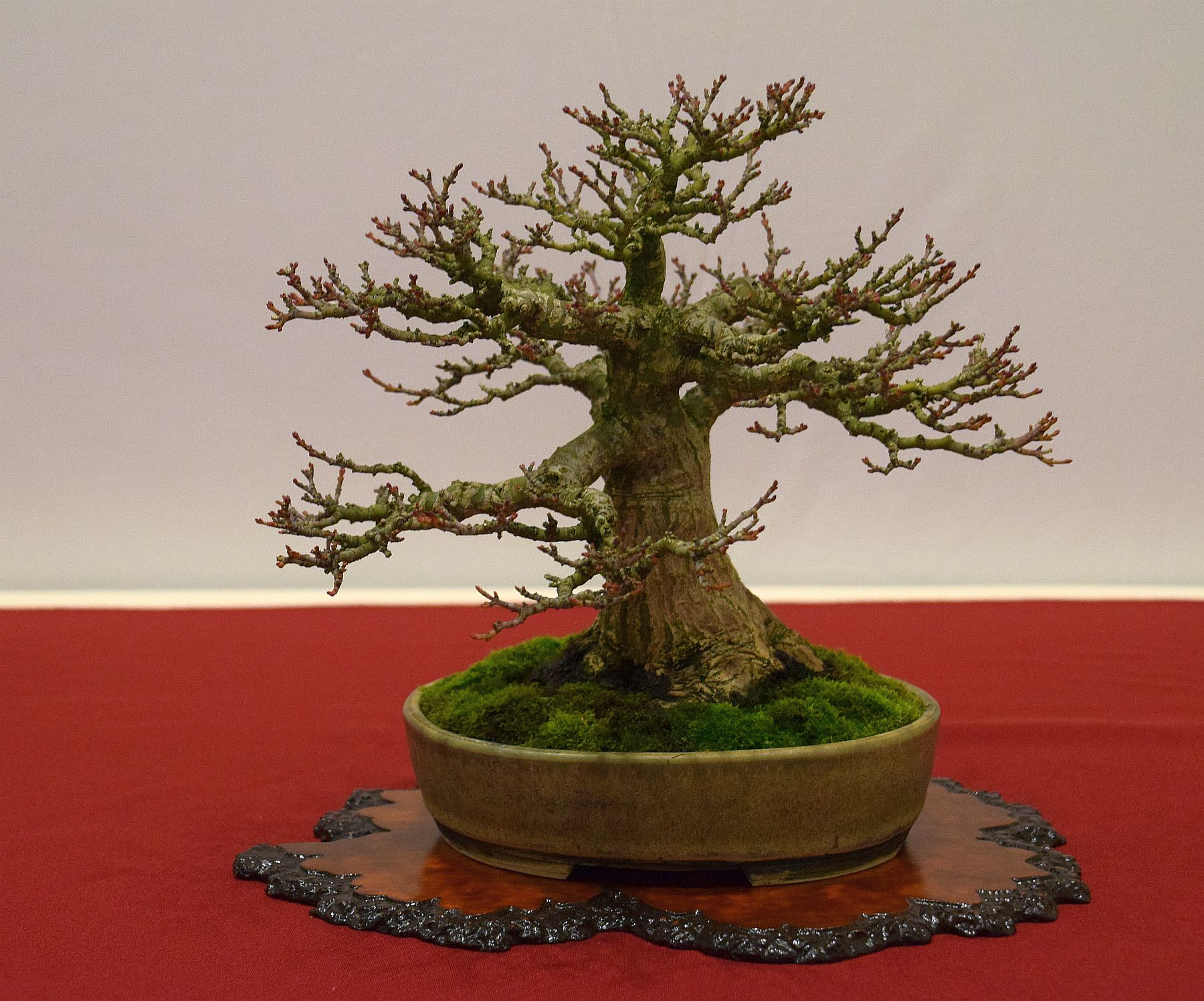 euk-bonsai-ten-2016-club-bonsai-125