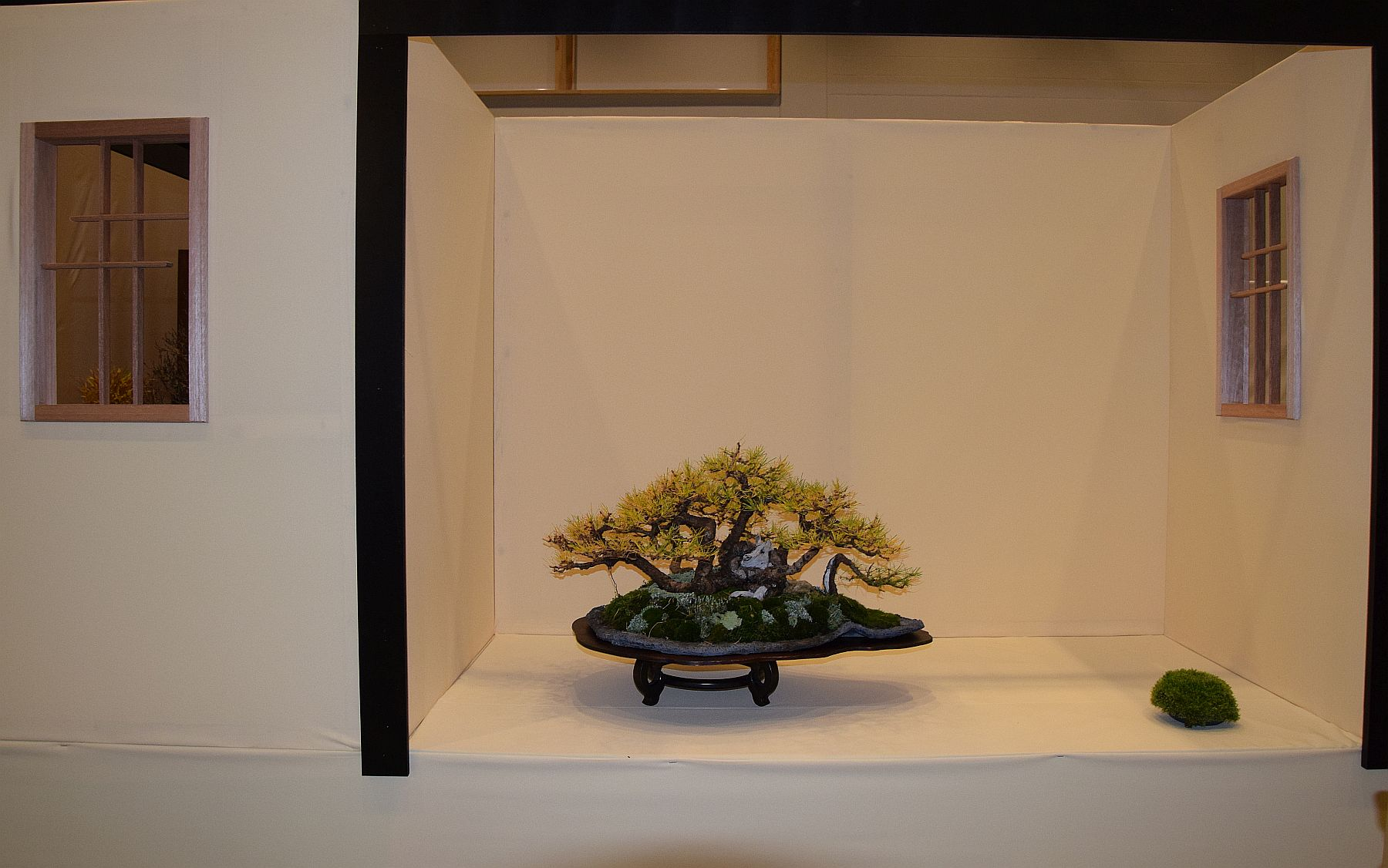 euk-bonsai-ten-2016-club-bonsai-130