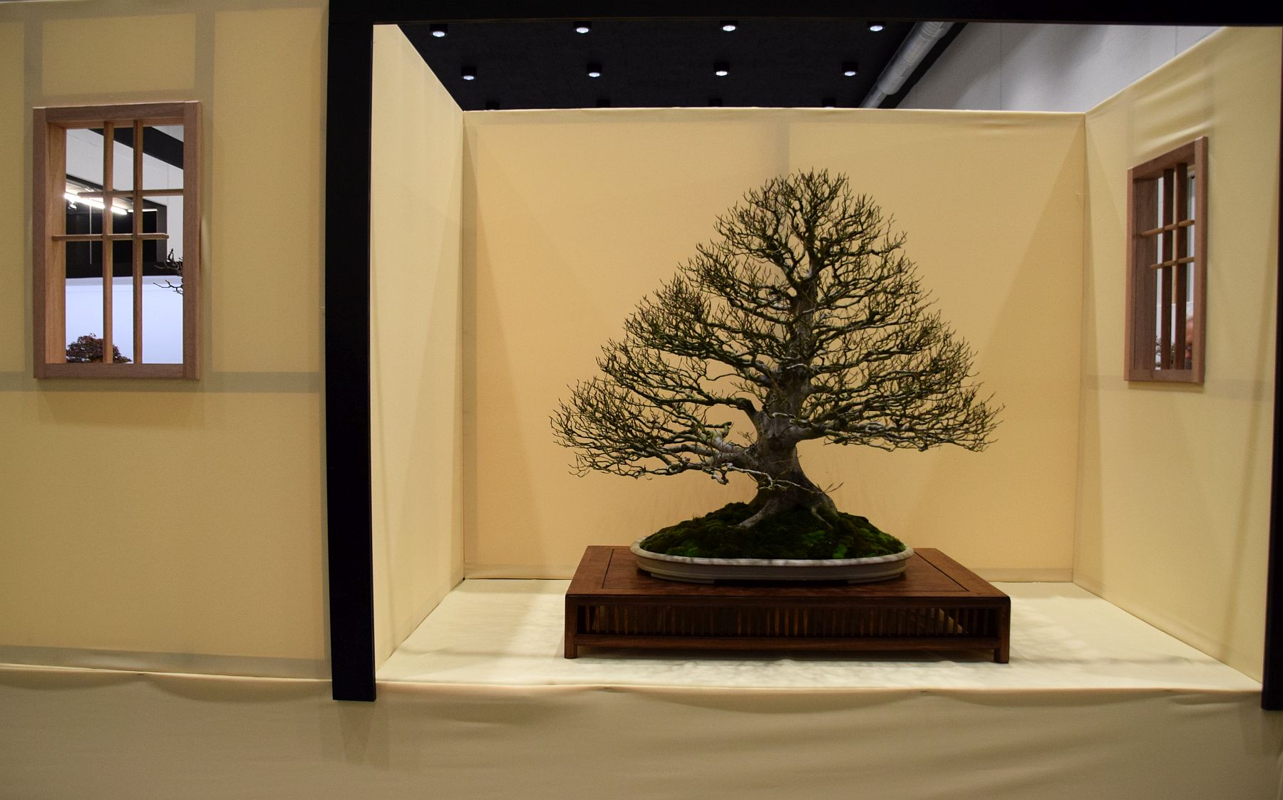 euk-bonsai-ten-2016-club-bonsai-131