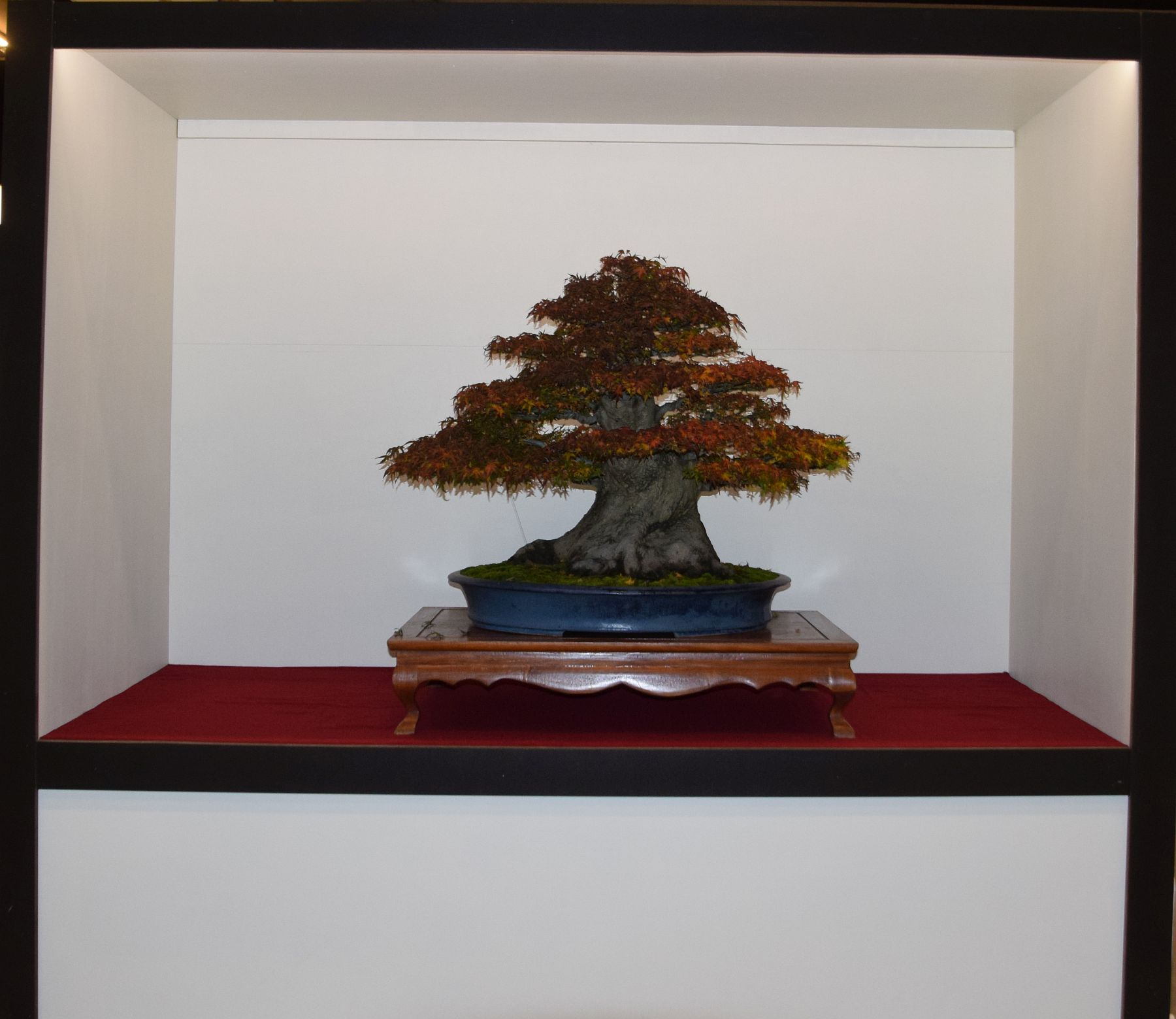 euk-bonsai-ten-2016-club-bonsai-132