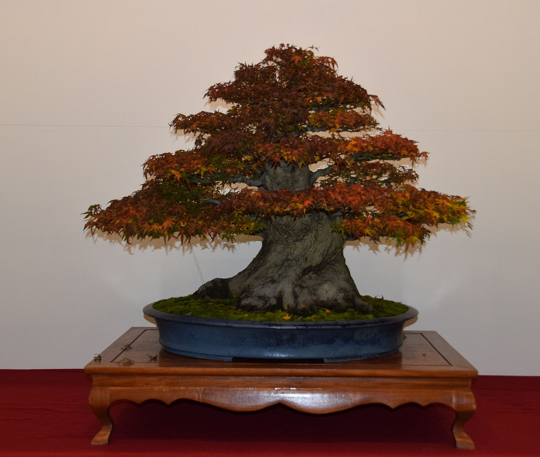 euk-bonsai-ten-2016-club-bonsai-133