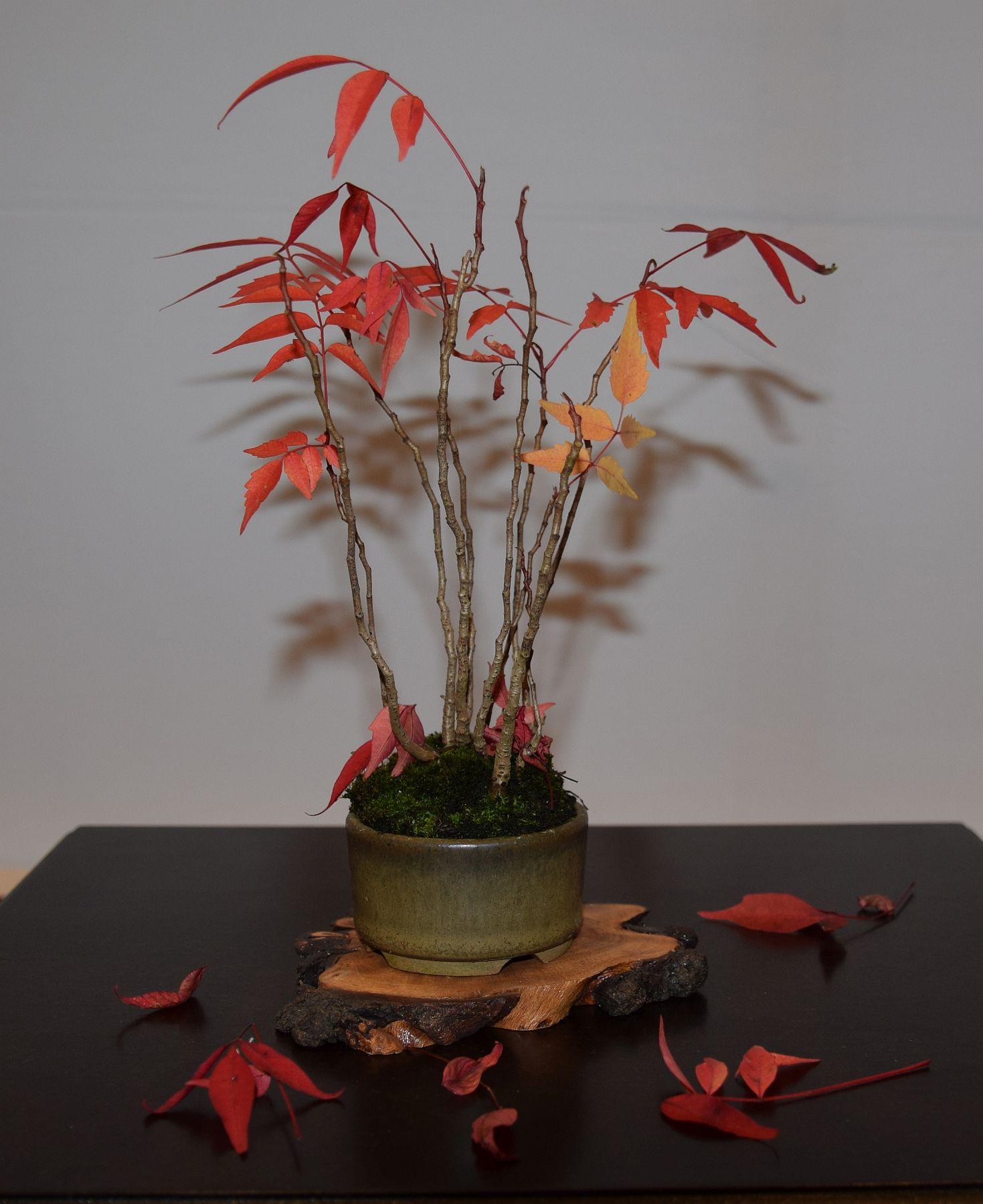 euk-bonsai-ten-2016-club-bonsai-140
