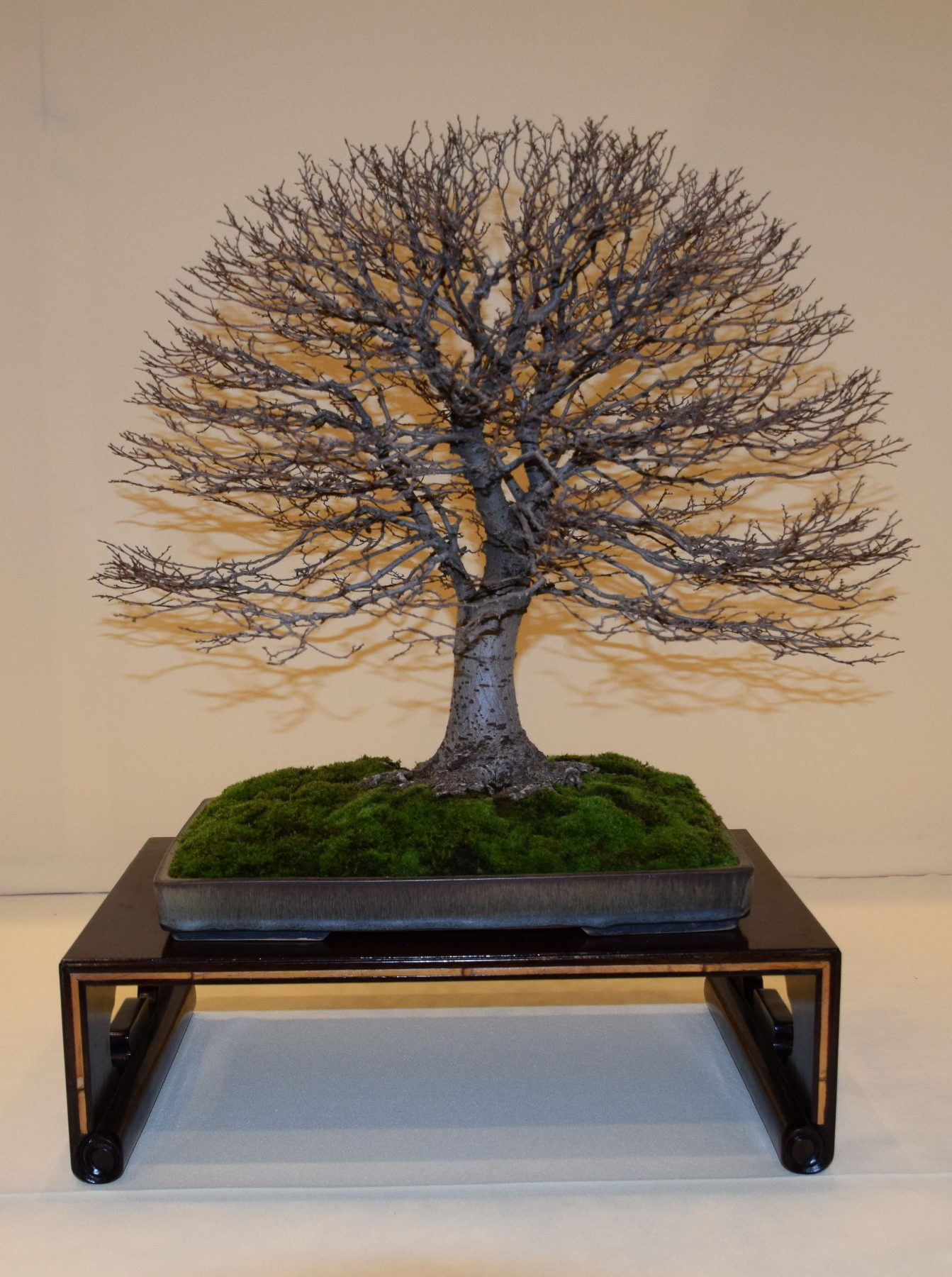 euk-bonsai-ten-2016-club-bonsai-151