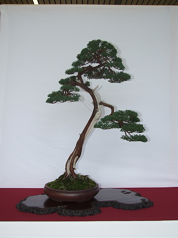 EUK Juniperus Hans 6