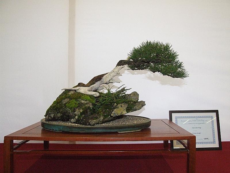 EUK Pinus Marinko Beg 2