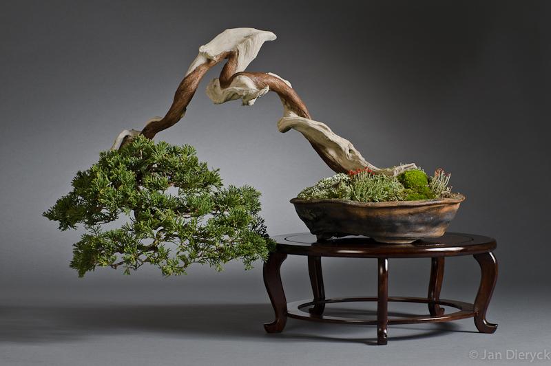 Juniperus sabina - Martin Tielens