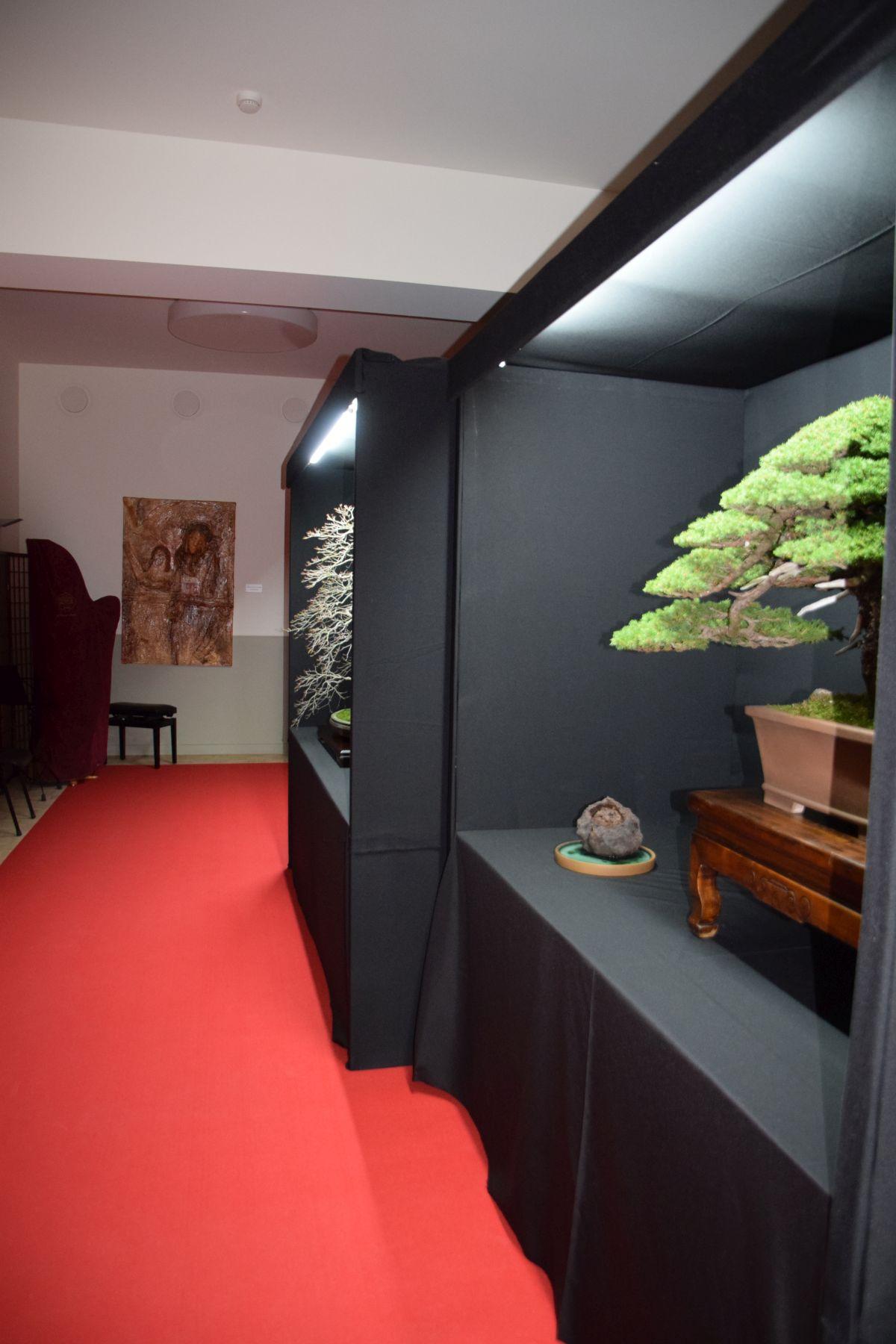 bonsai-museum-luis-vallejo-002