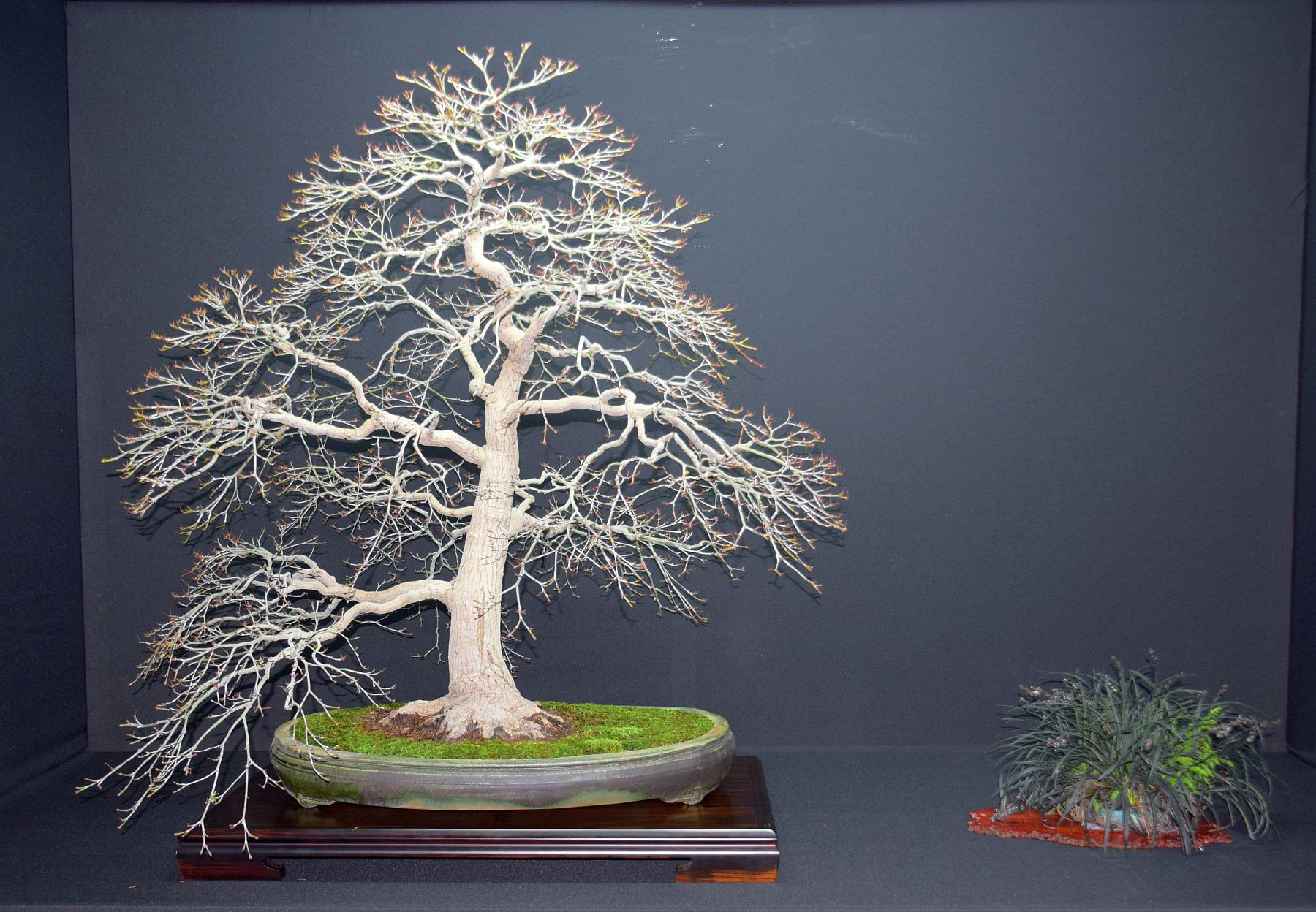 bonsai-museum-luis-vallejo-005