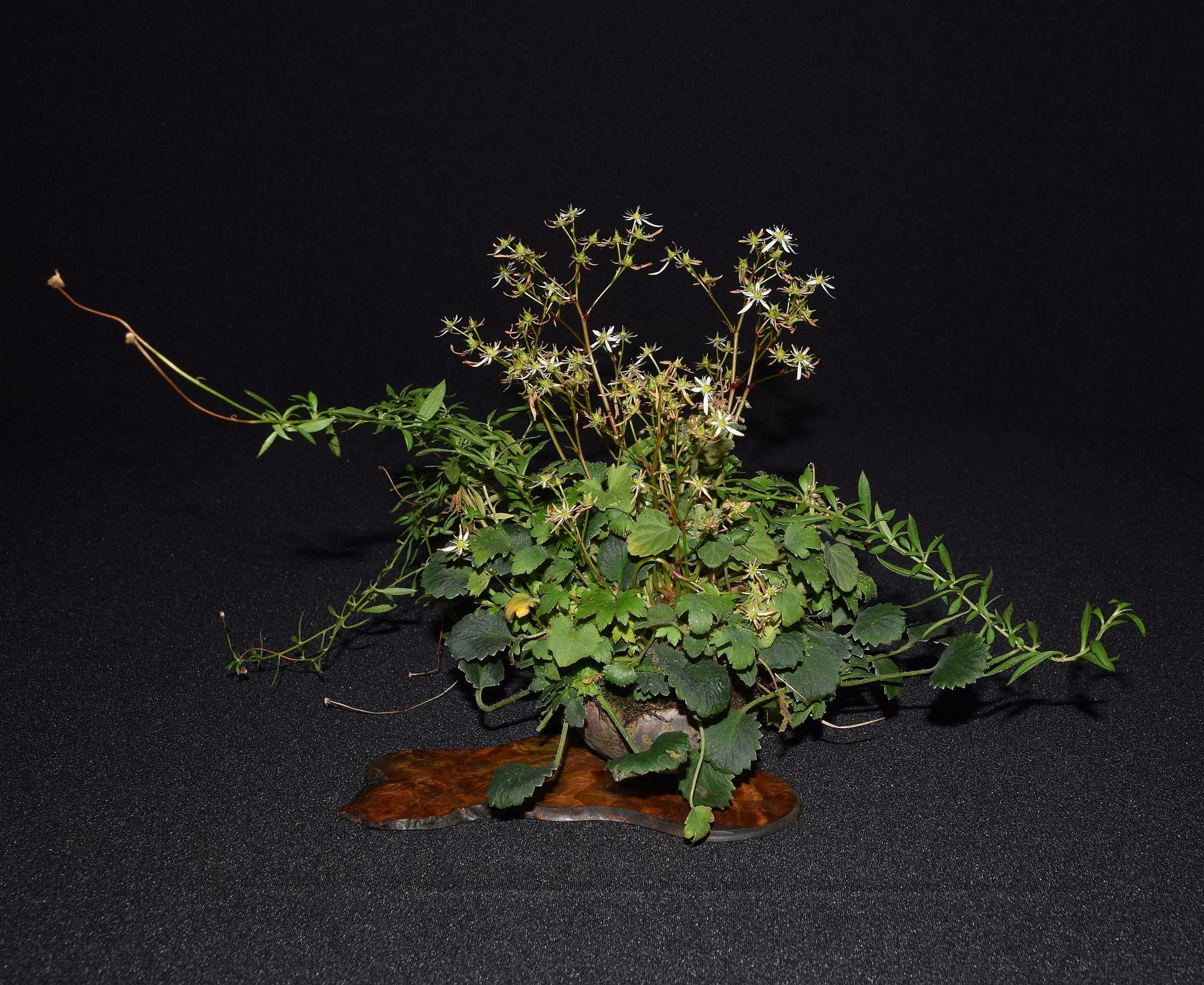 bonsai-museum-luis-vallejo-007