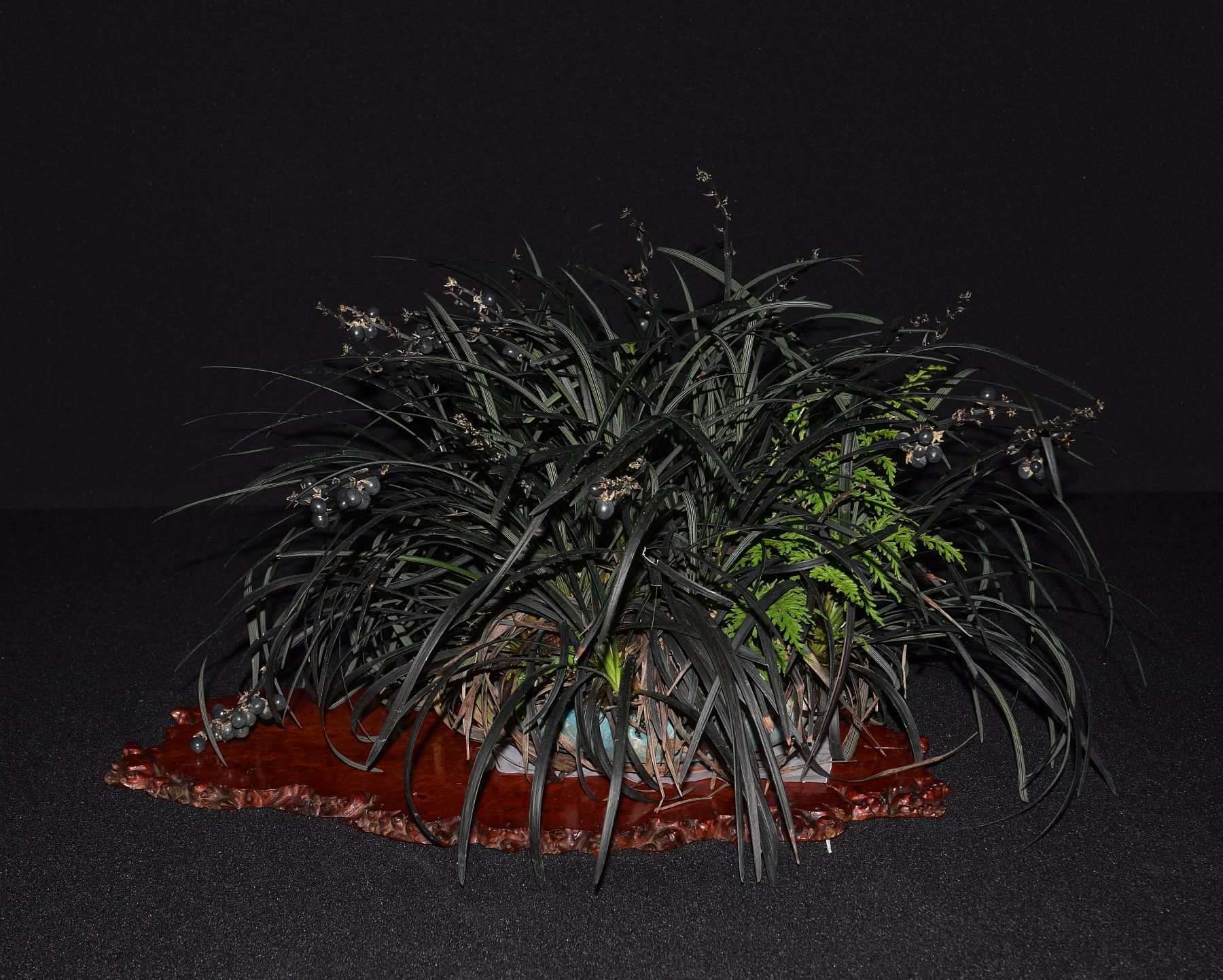 bonsai-museum-luis-vallejo-008