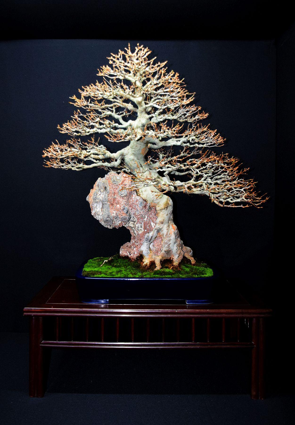 bonsai-museum-luis-vallejo-015