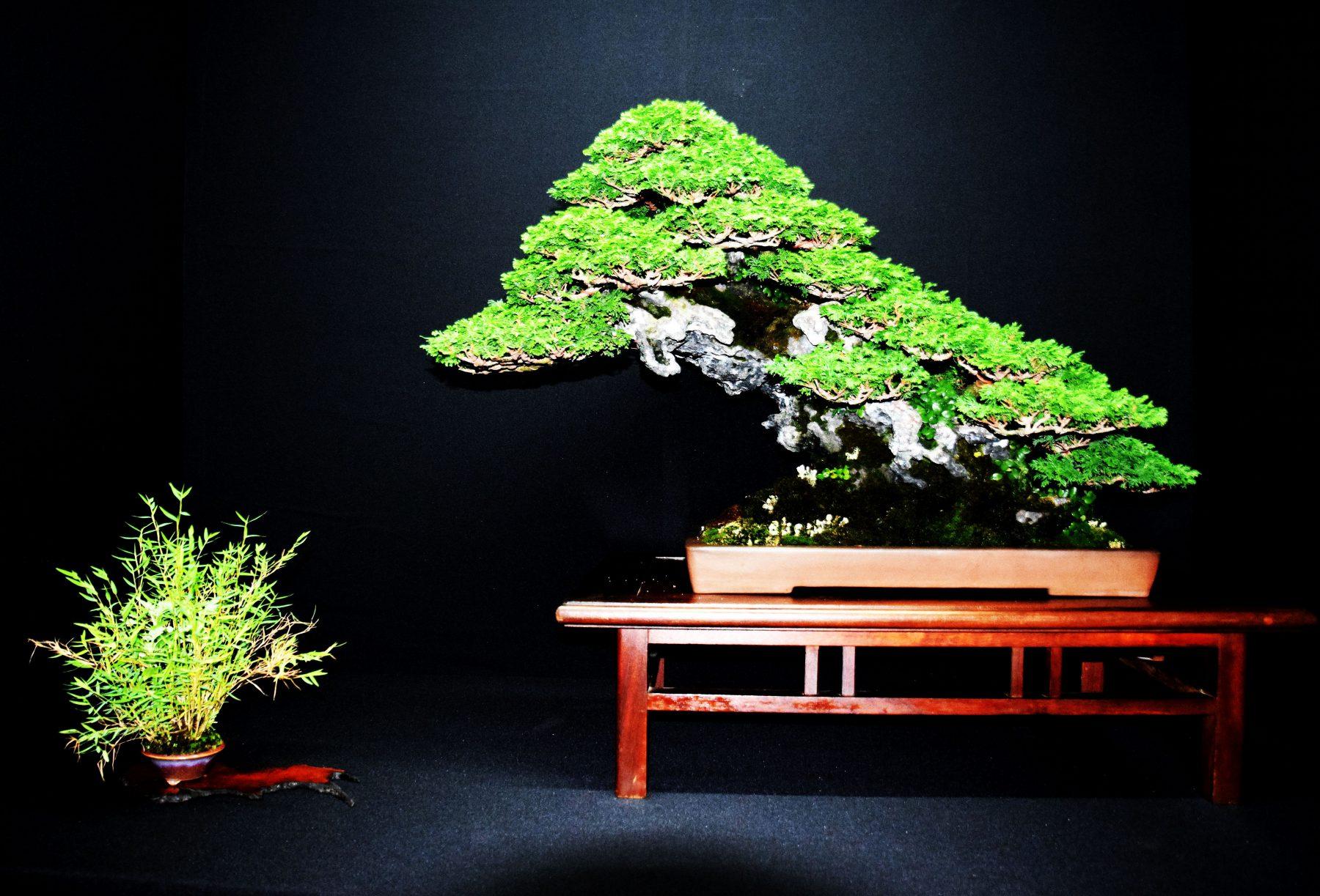 bonsai-museum-luis-vallejo-017