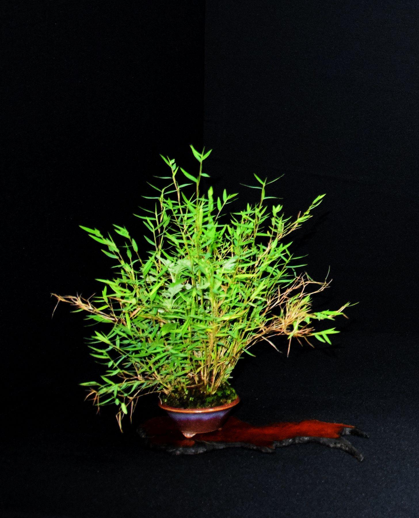bonsai-museum-luis-vallejo-018