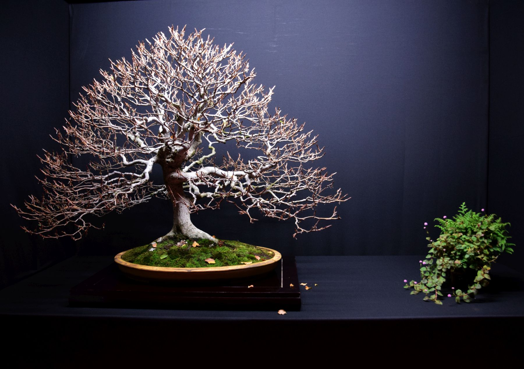 bonsai-museum-luis-vallejo-020