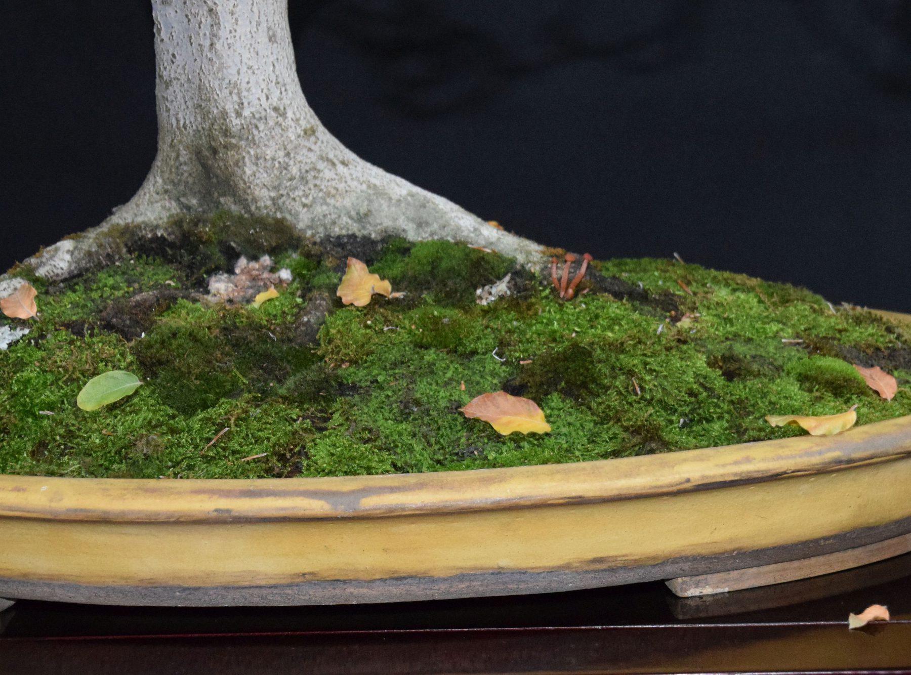 bonsai-museum-luis-vallejo-022