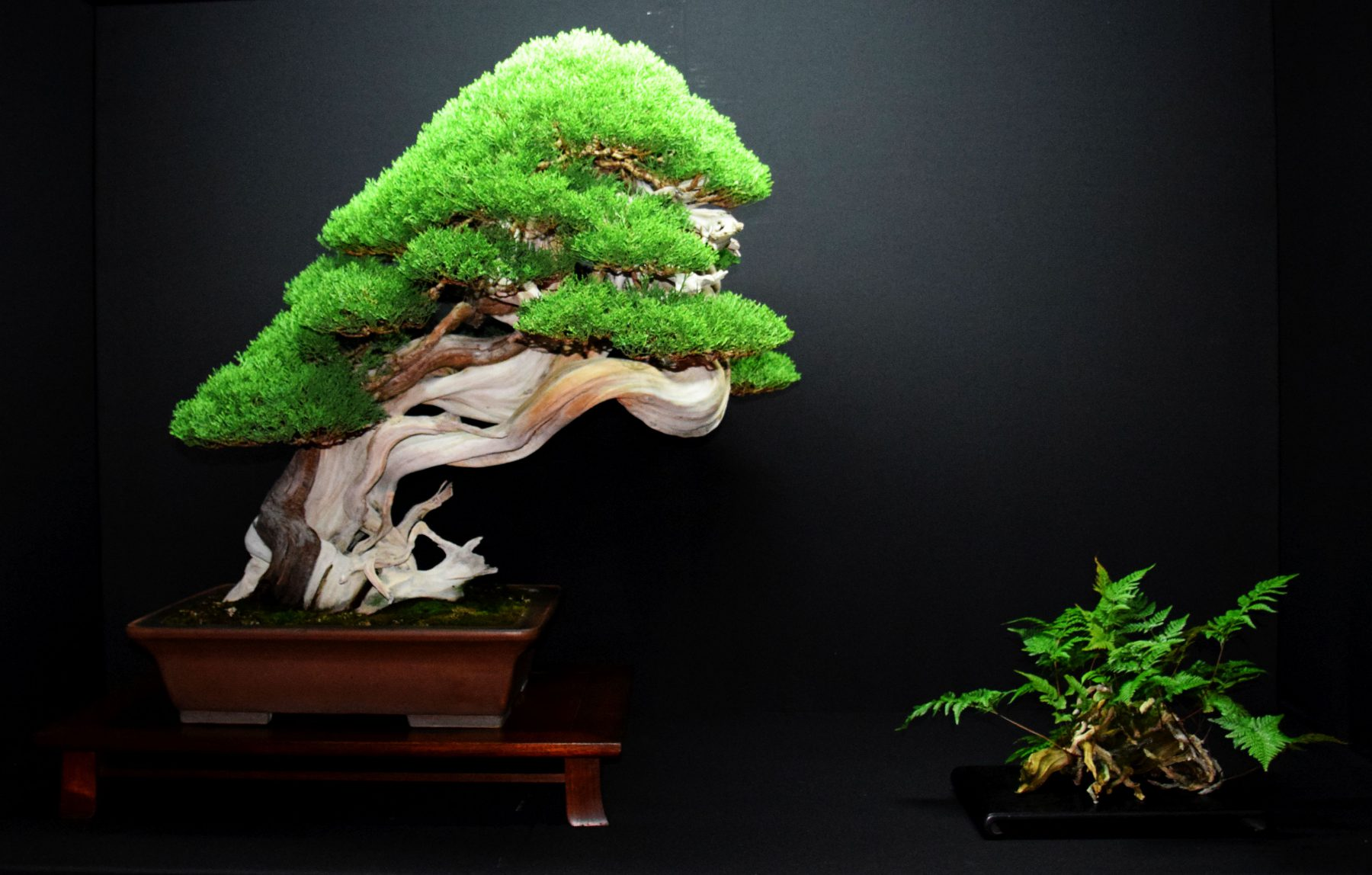 bonsai-museum-luis-vallejo-023