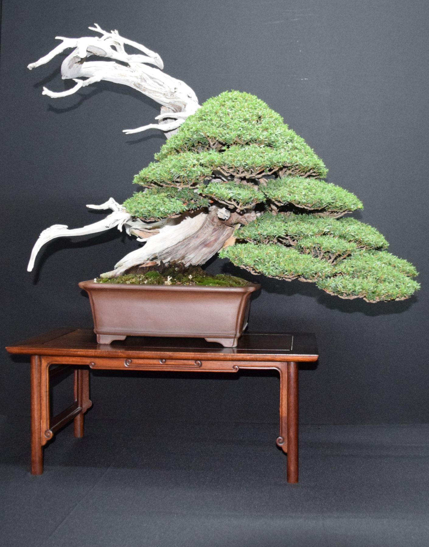 bonsai-museum-luis-vallejo-028