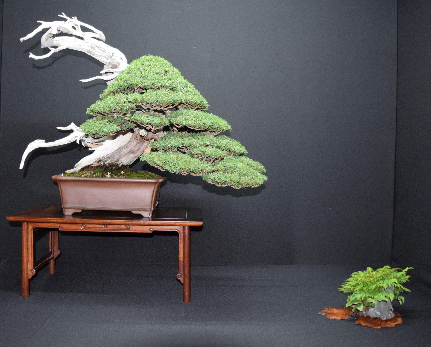 bonsai-museum-luis-vallejo-029